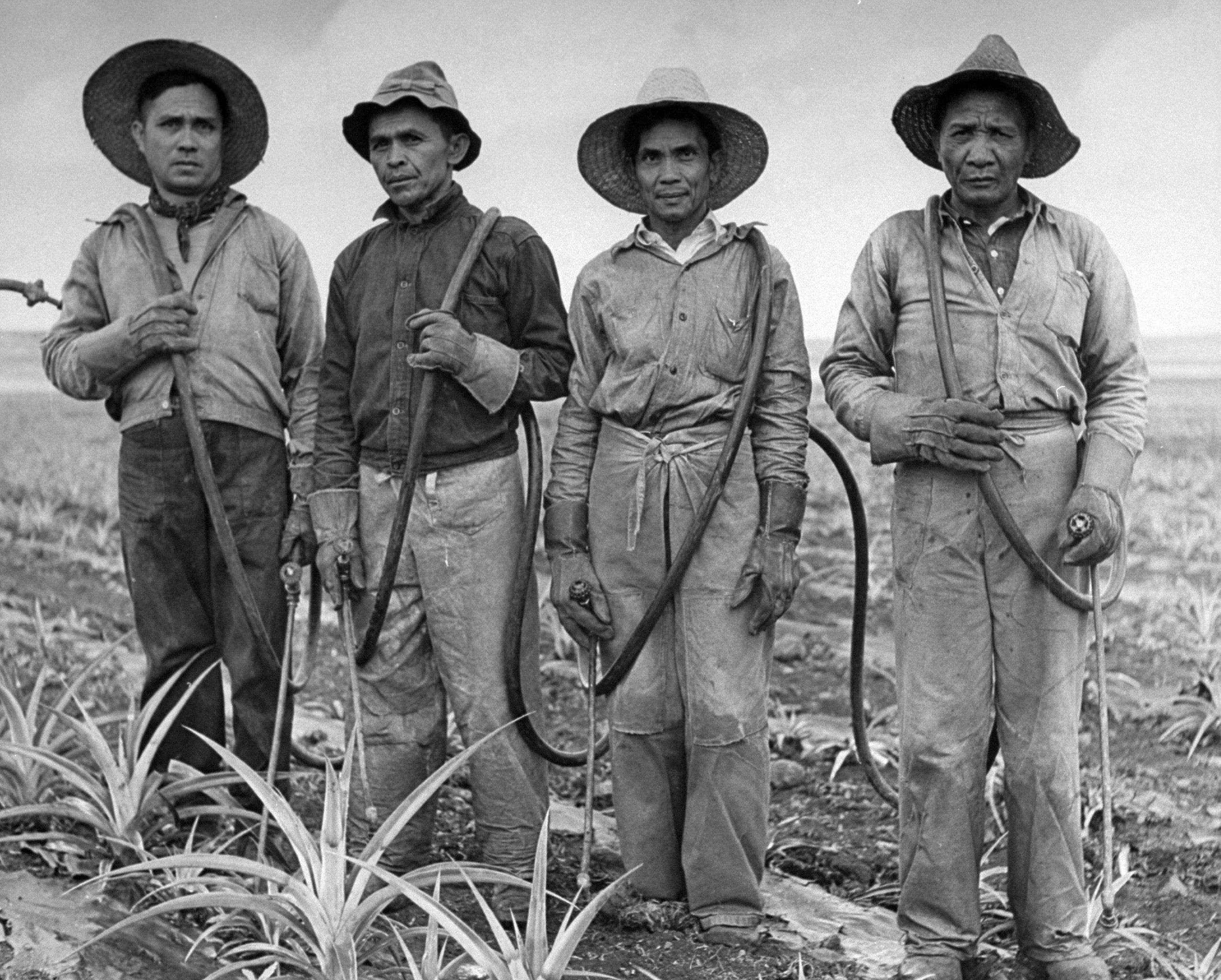 Plant sprayers at the Dole Plantation in Hawaii pose for a portrait.