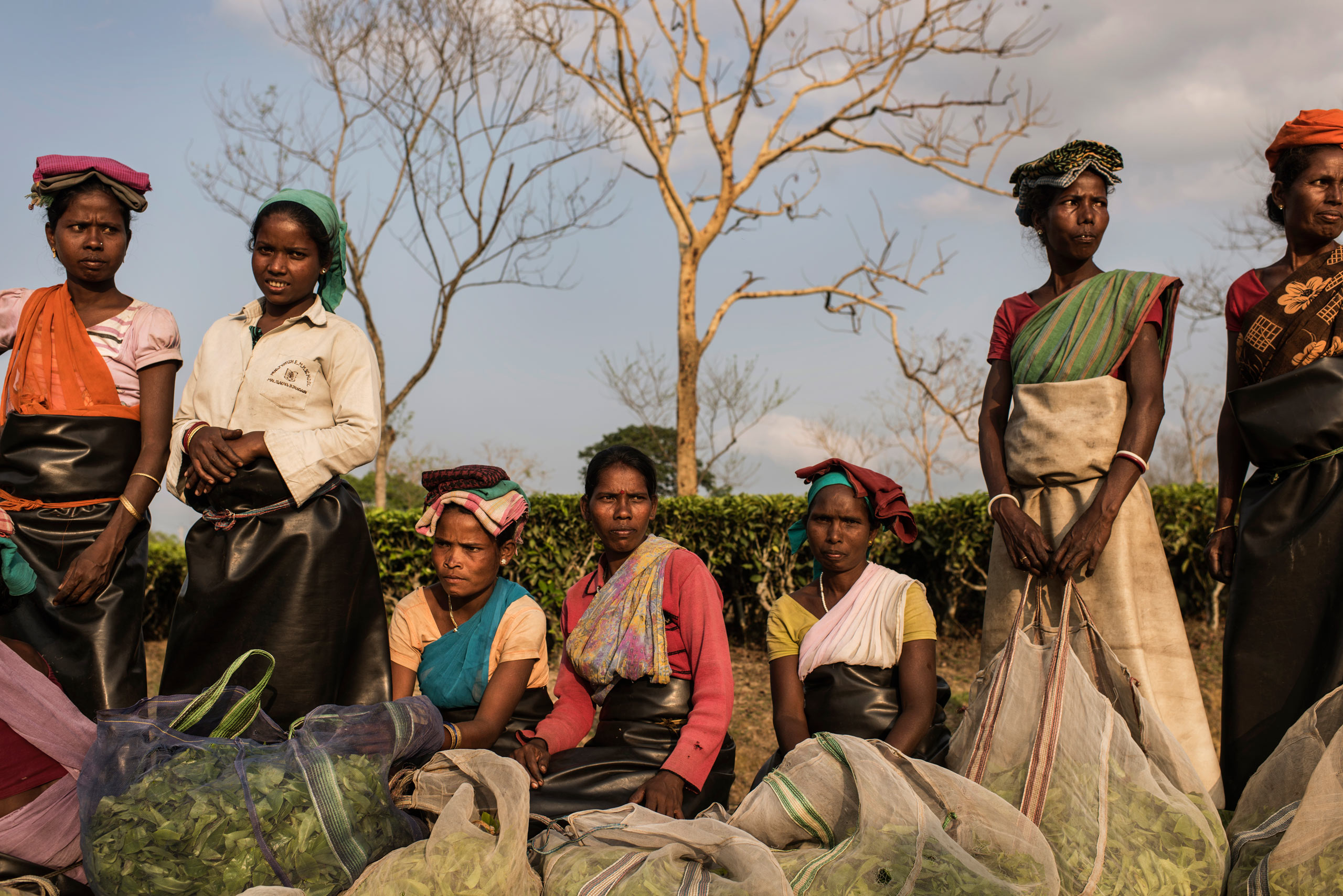 Indian women wait to weigh their tealeaves at the end of a workday on a tea plantation in the Tinkharia garden in Assam, India. April 8, 2015.                                Many families in Assam work on the tea plantations, where there is a high rate of pregnant and lactating women. Women are severely anemic due to poor diets and little to no prenatal care, which leads to a high number of pregnancy complications.
