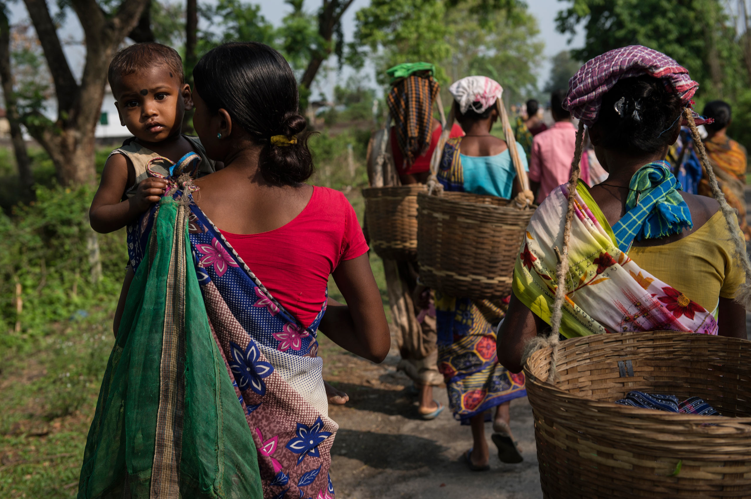 Indian women walk to work with their children to pick tealeaves on a tea plantation in the Panbari Tea Estate in Assam. India, April 9, 2015.
