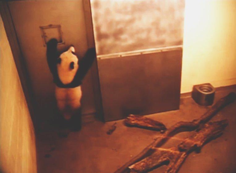 arko-datto-captivecam-zoo-surveillance-1