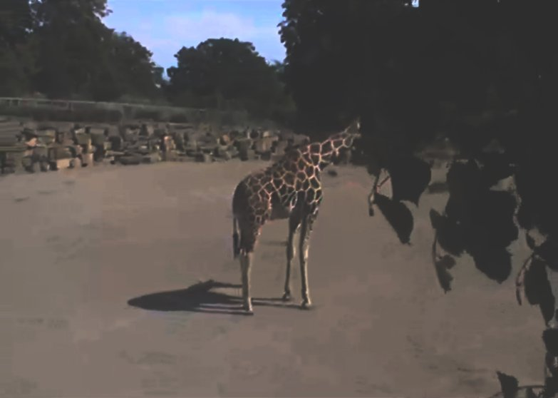 arko-datto-captivecam-zoo-surveillance-2