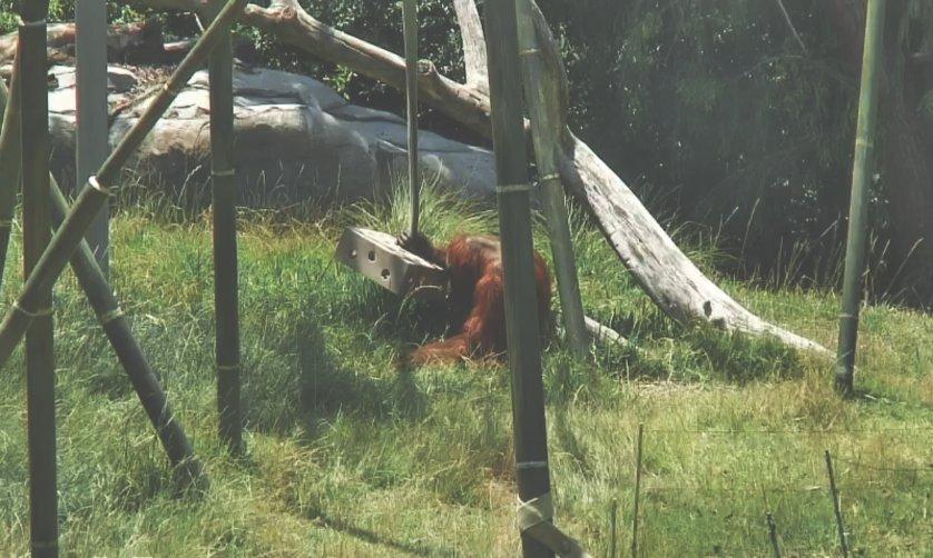 arko-datto-captivecam-zoo-surveillance-3