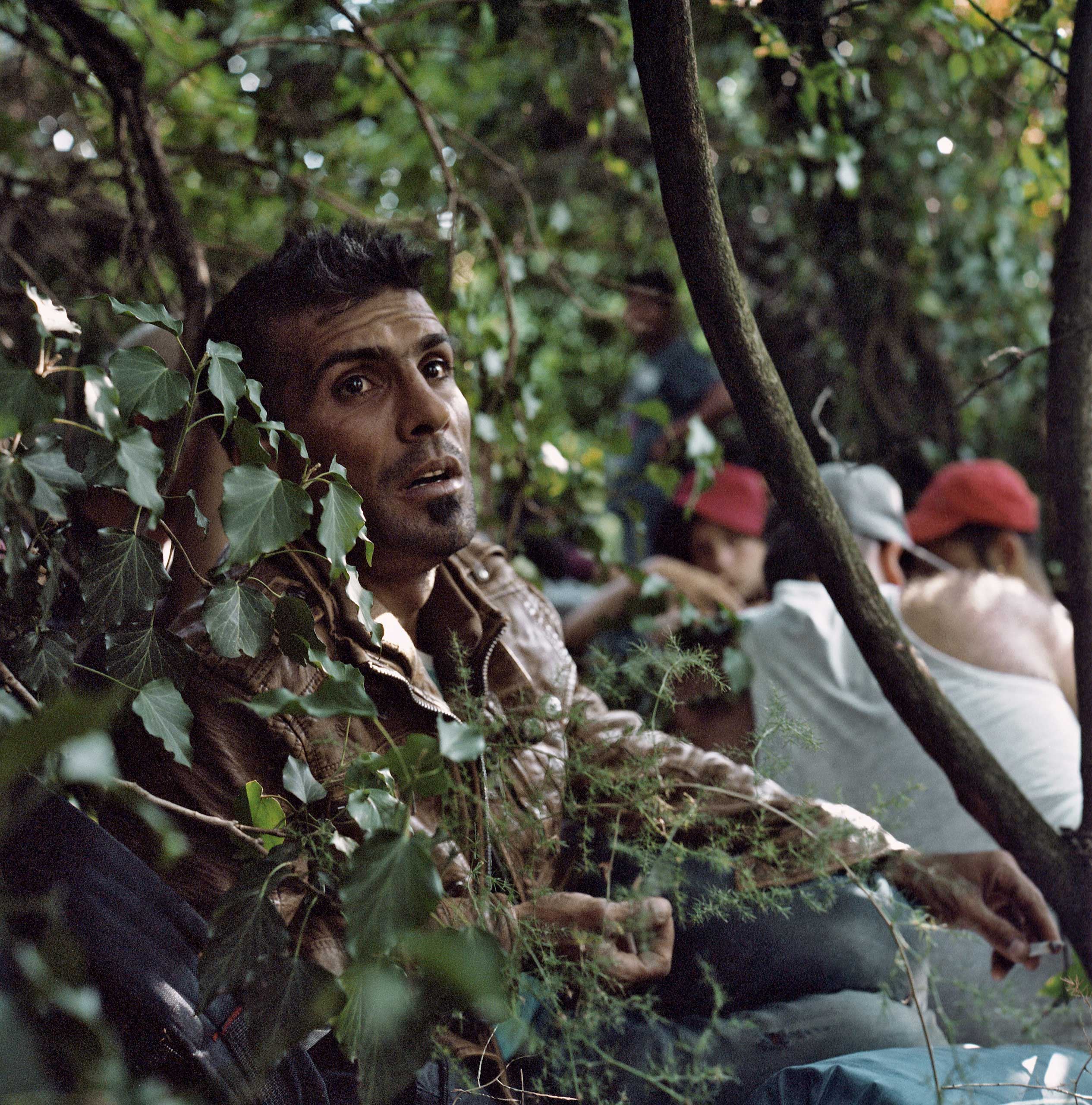 Syrian and Iraqi men hide in the bushes a few meters into the Macedonian territory waiting for nightfall in order to advance further into Macedonia, on their way to cross Serbia and Hungary with the hope of reaching Western Europe. Macedonia, June 2015.