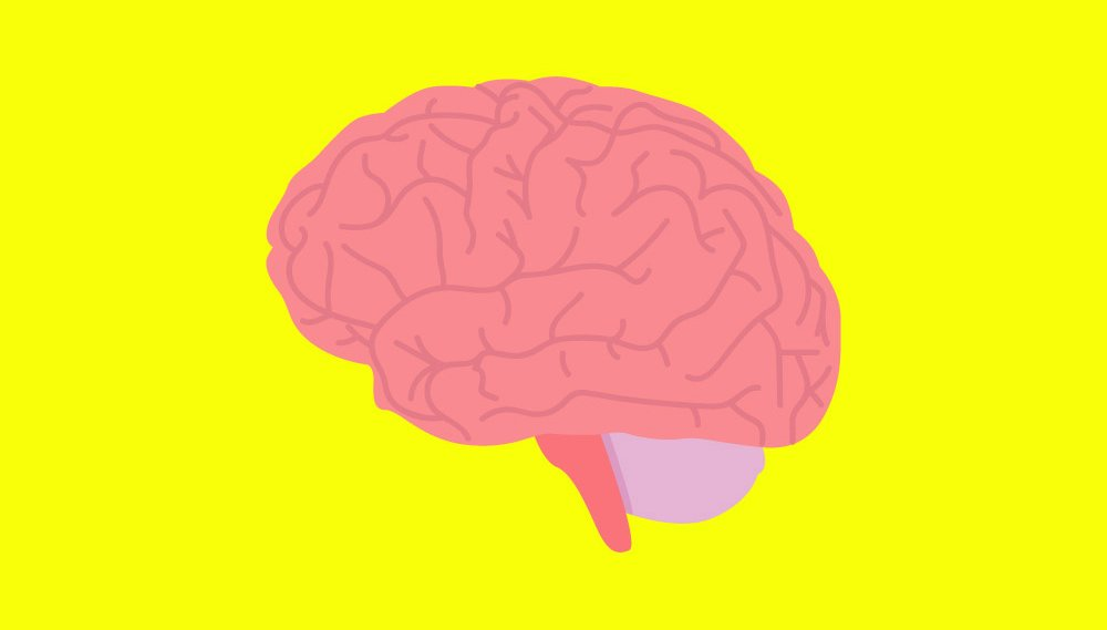 The More Active Your Brain, the Shorter Your Lifespan May Be, a New Study Says