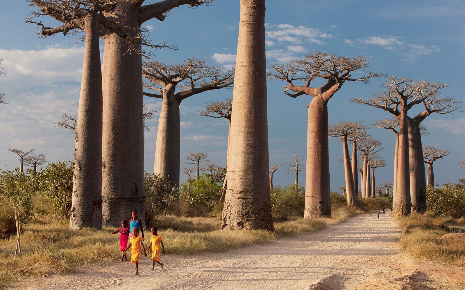 A group of young girls walk through Avenue of the Baobabs, near Morondava, Madagascar