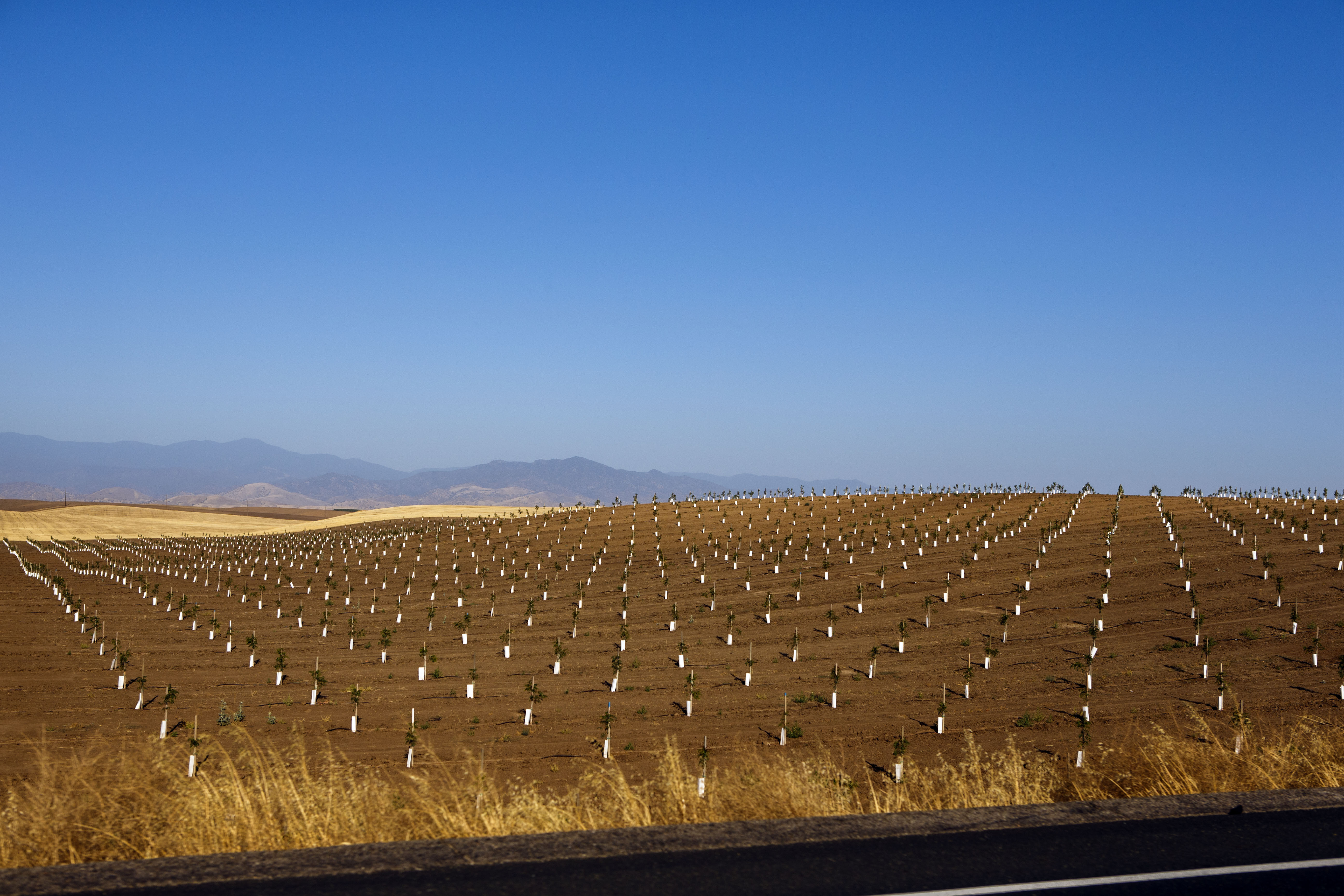 A field of recently planted crops grows off California Highway 65, near Ducor and south of Porterville during the historic California drought on June 24, 2015 near Ducor, Calif. The rural poor depend on groundwater and with farmers digging deep to water their fields,  communities relying on groundwater struggle.
