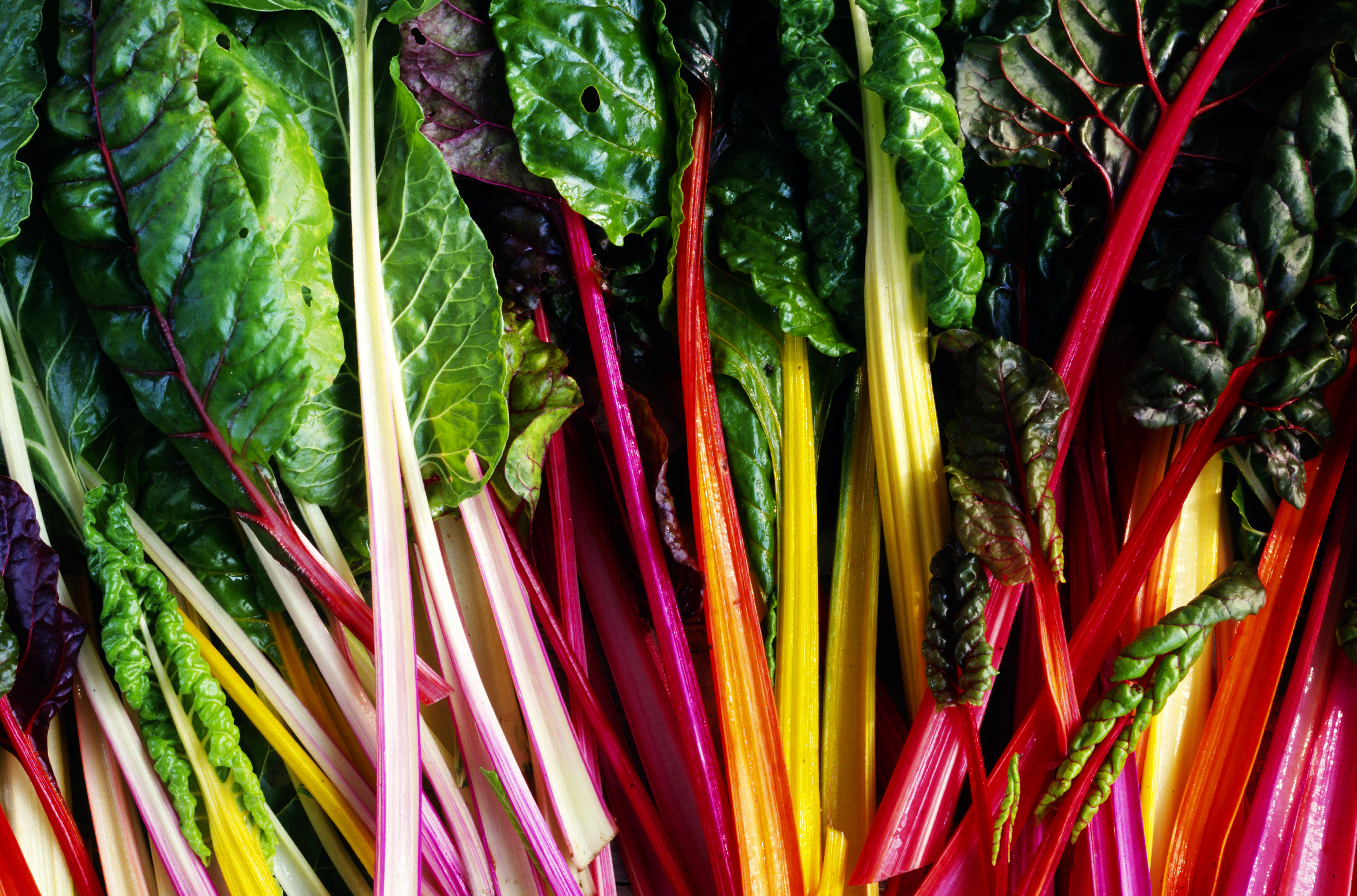 Swiss chard tolerates both cool temperatures and the heat, so you will see tasty varieties in September.