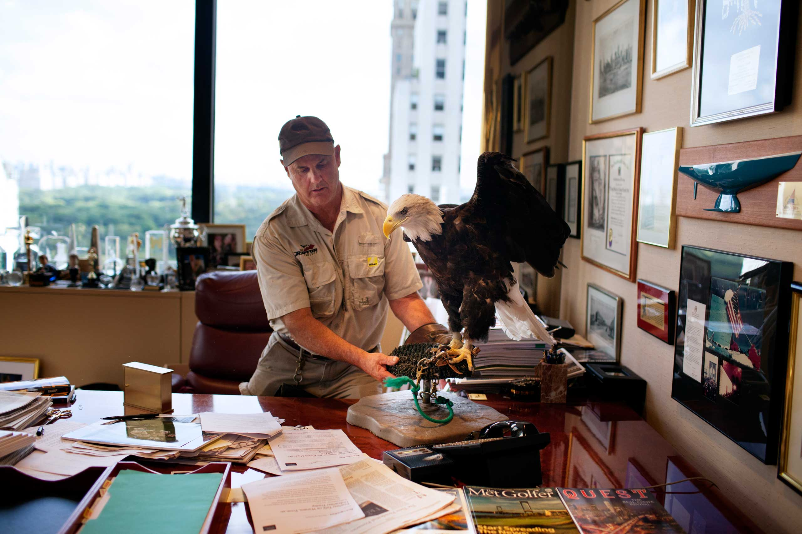 Trainer Jonathan Wood positions Uncle Sam, an American bald eagle, on Donald Trump's desk.