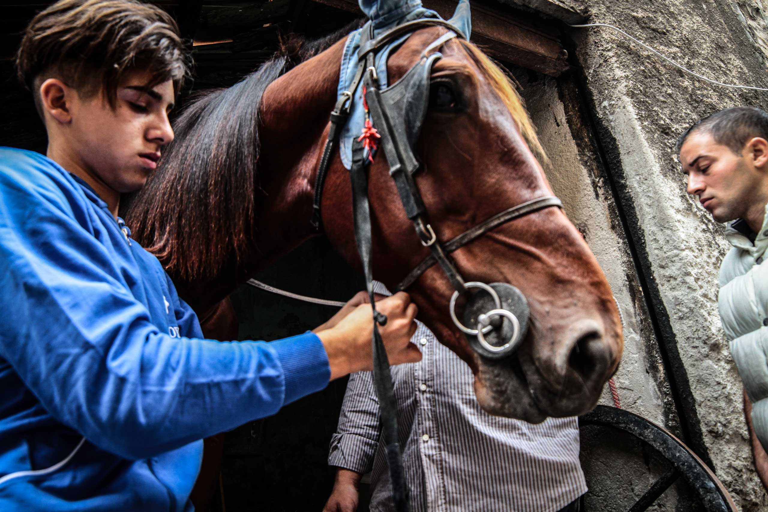 Young men take out a horse that is used in illegal horse racing for training in Ballarò, Palermo, Italy, in  June 2015.