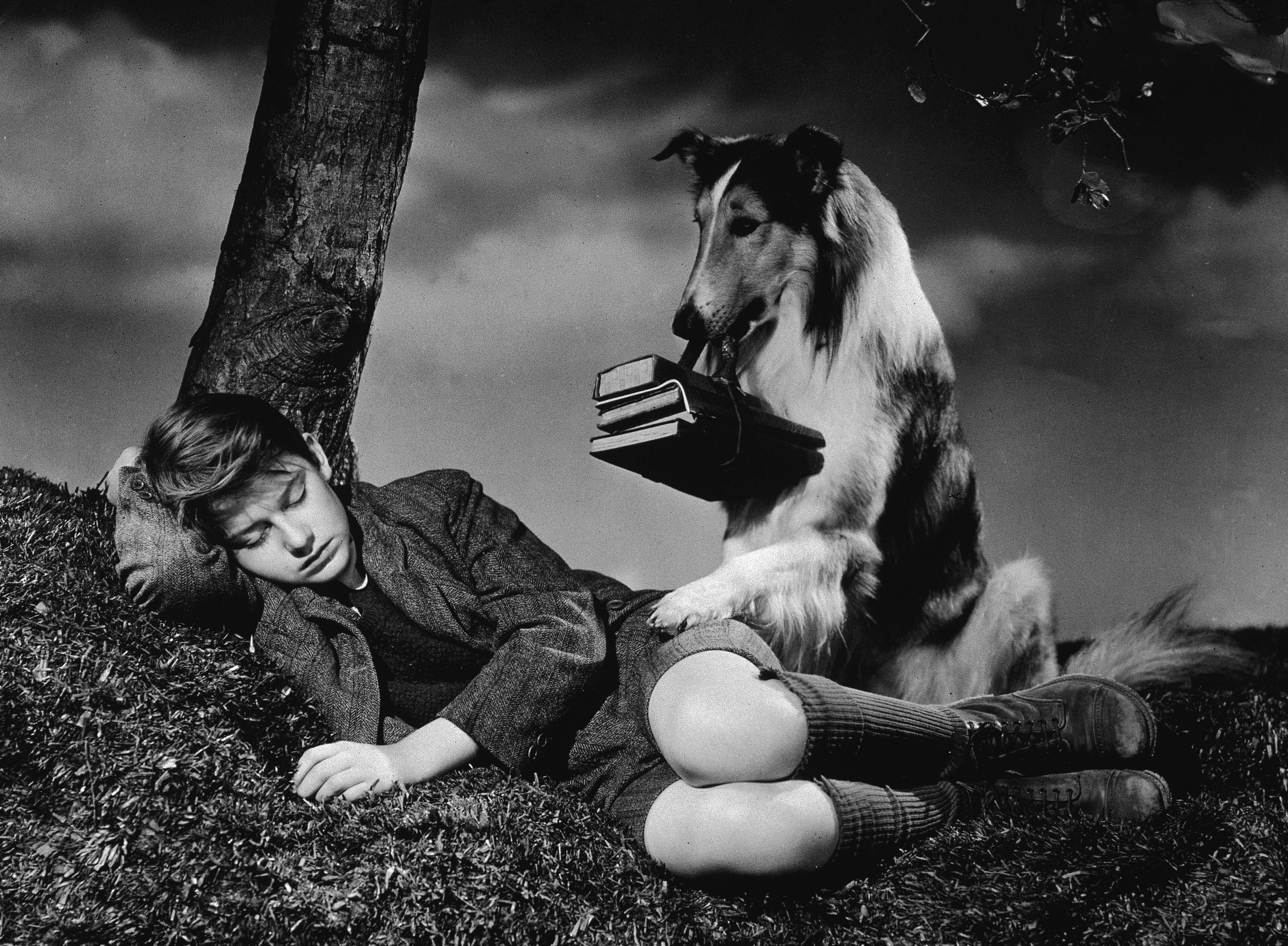 Lassie in Lassie