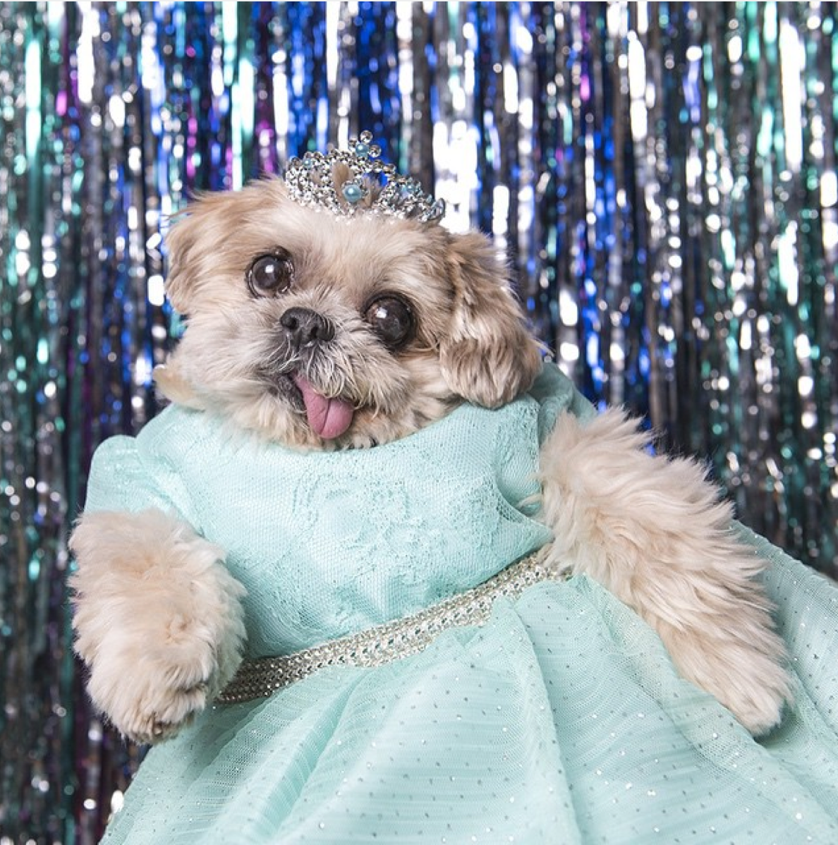 17 Dogs You Should Follow On Instagram