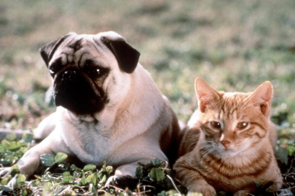 Otis from  The Adventures of Milo and Otis.