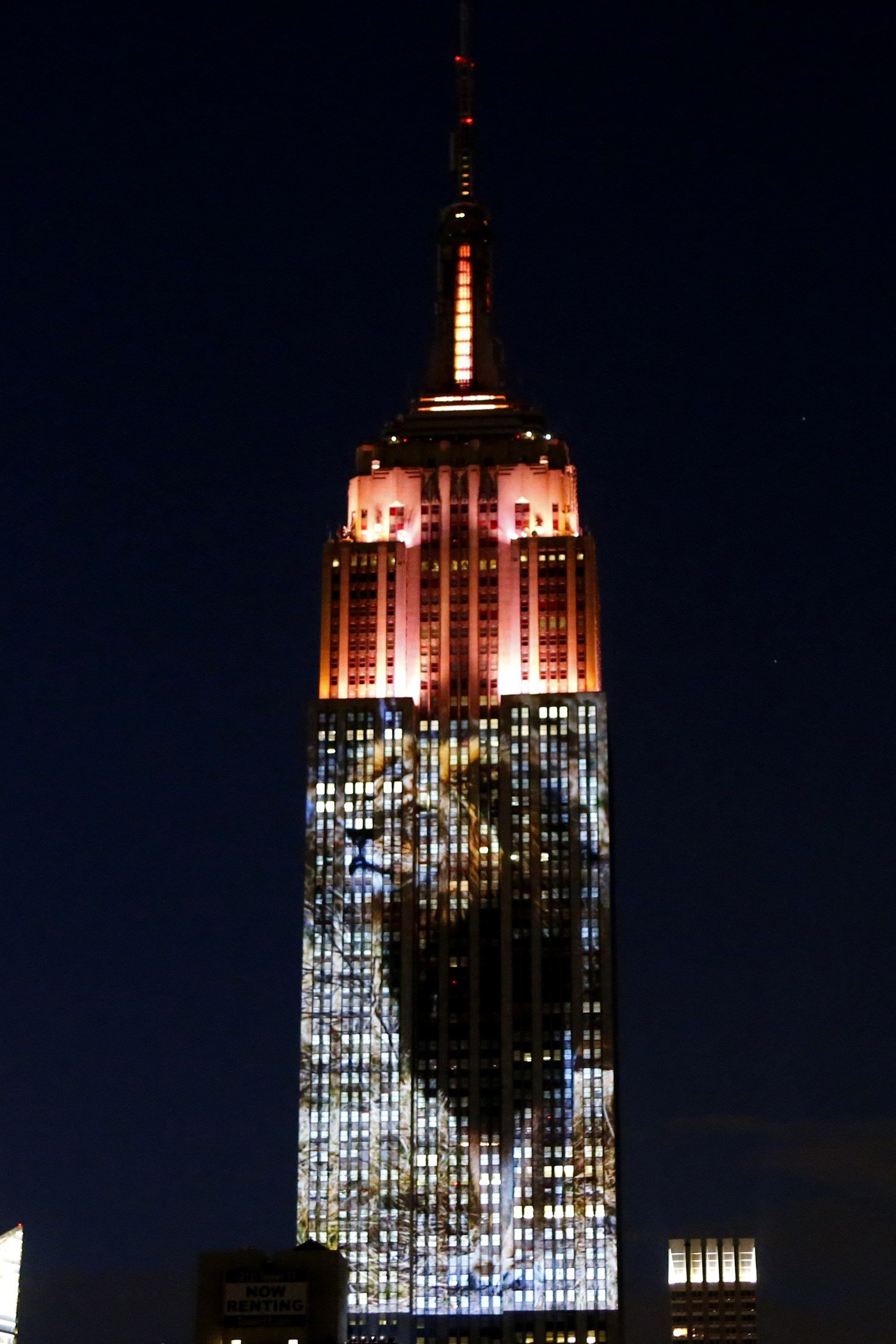 Cecil the lion from Zimbabwe is seen on the Empire State Building, in the 'Projecting Change on the Empire State Building' project, made by the Oscar winning director and founder of the Oceanic Preservation Society Louis Psihoyos and producer Fisher Stevens, in New York City on Aug. 1, 2015.