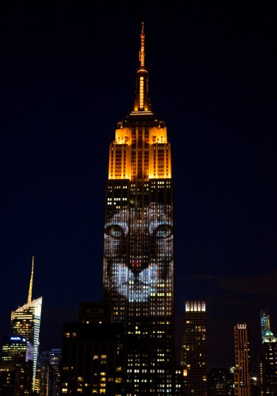 Empire State Building racing extinction