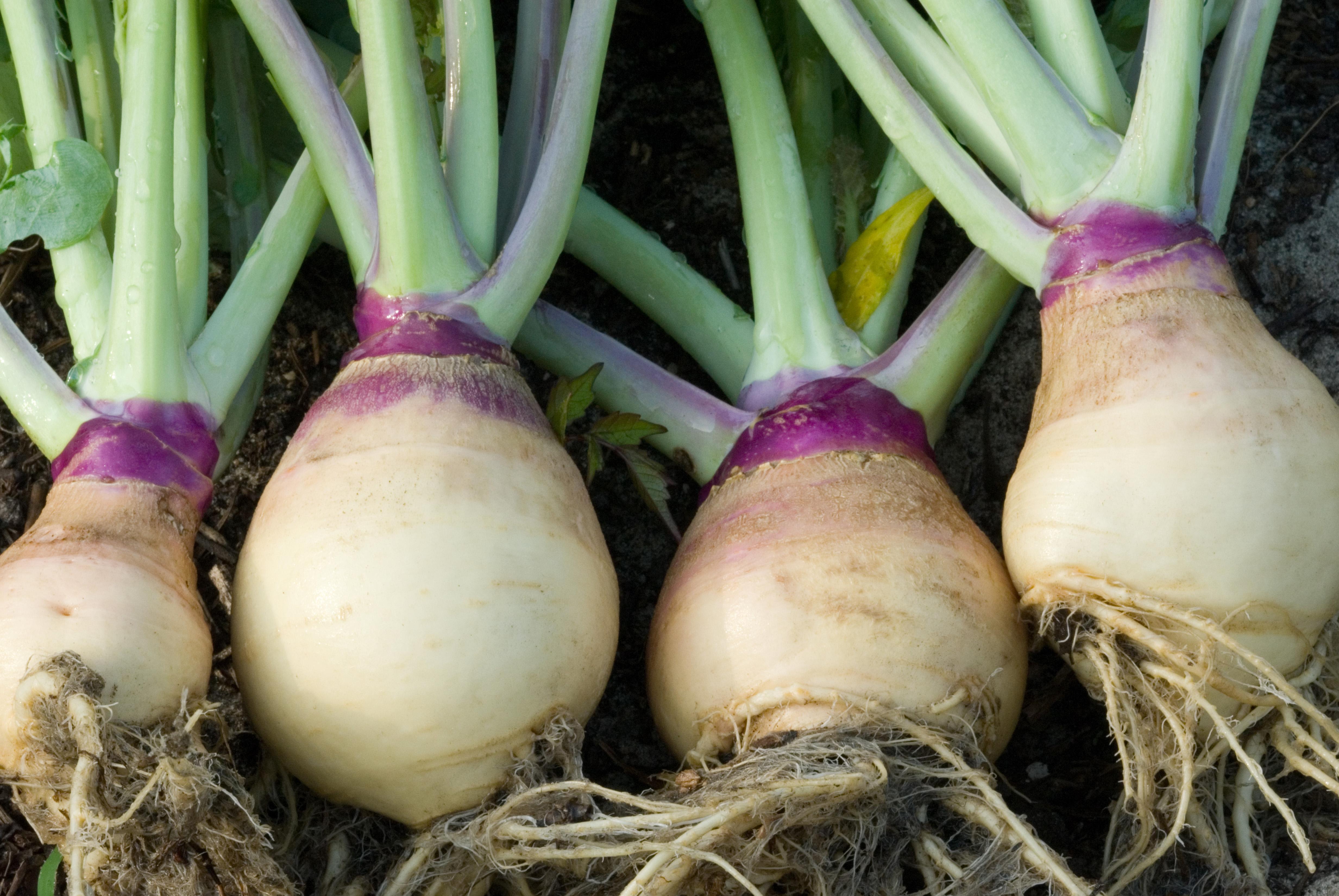 Rutabaga, a fall favorite, can be chunked or mashed, similar to potatoes.