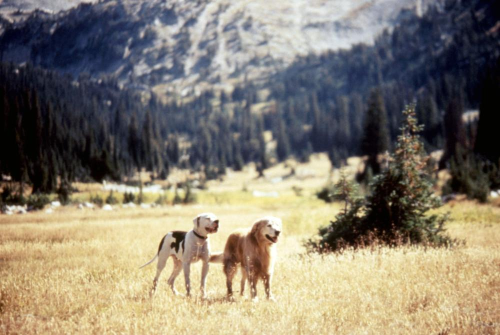 Shadow and Chance from Homeward Bound: the Incredible Journey.