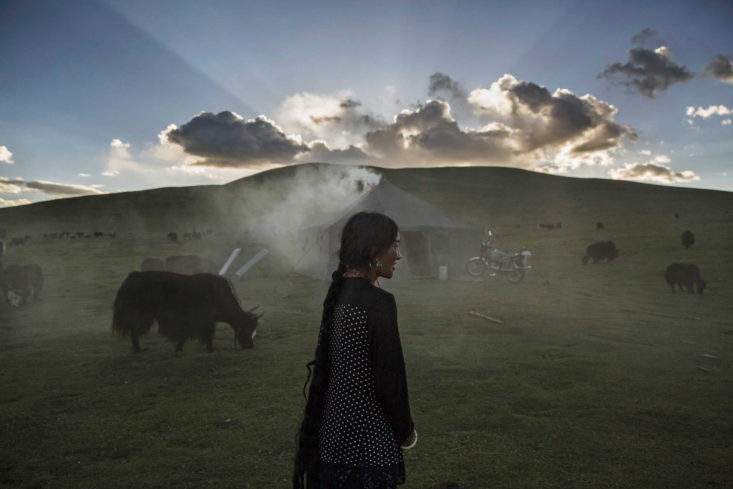 An ethnic Tibetan nomad woman stands with her Yak herd at their summer grazing area on the Tibetan Plateau in Yushu County,  on July 24, 2015.