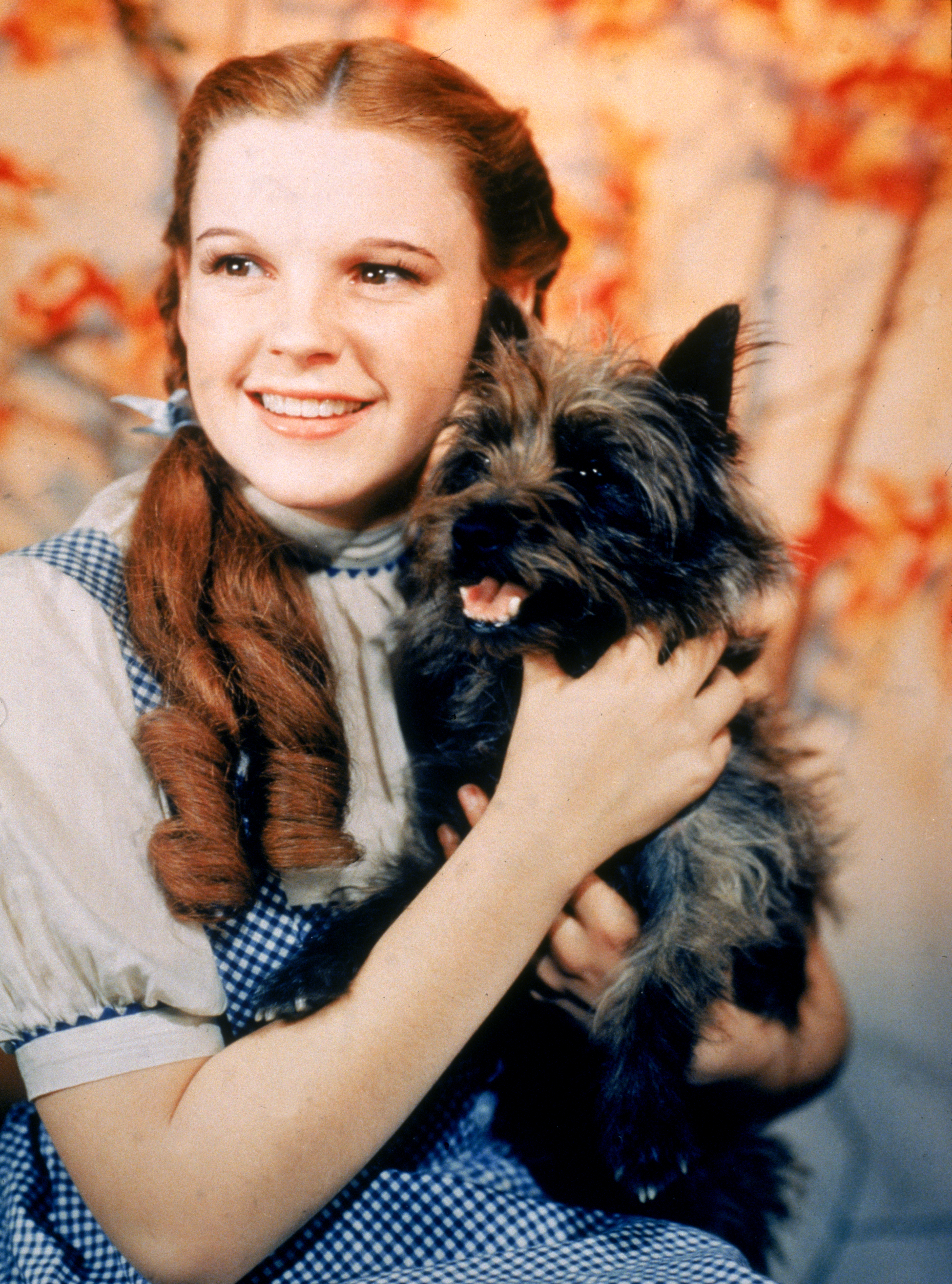 Toto from The Wizard Of Oz.