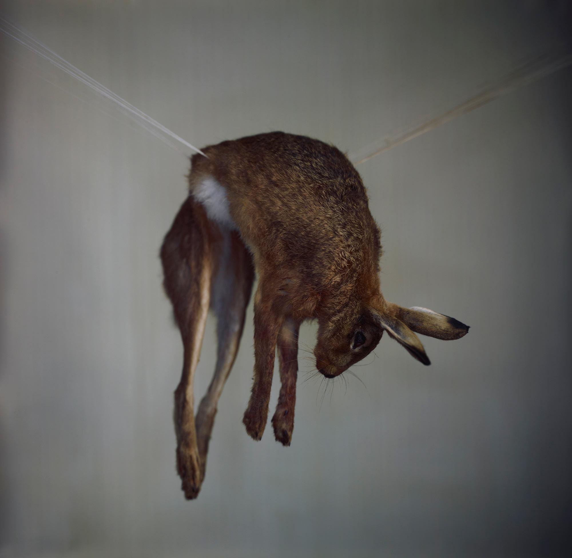Hare 1, 2012.