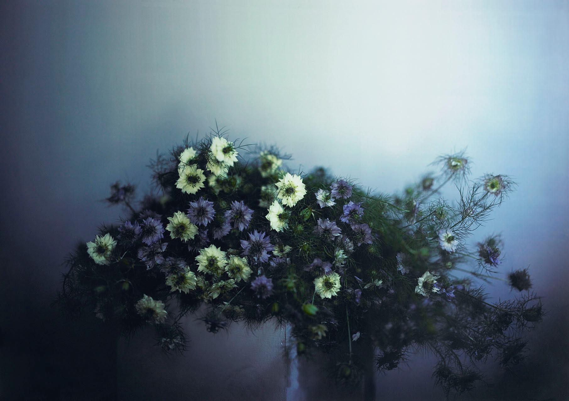 Wanda's Flowers, 2005.