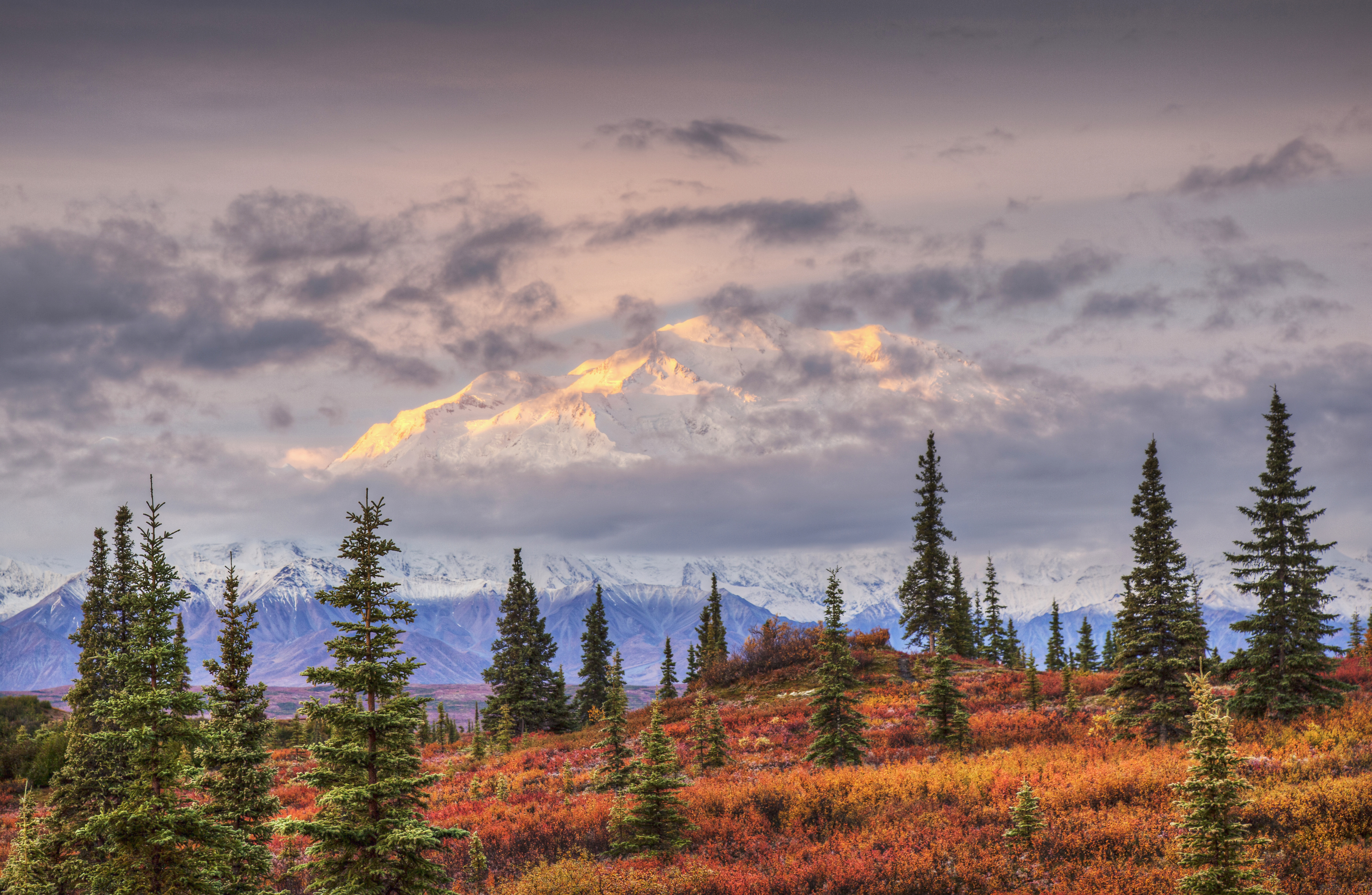 North face of Mt. Denali and fall colored tundra with early morning light filtered by a thin layer of clouds over the mountain as seen from Wonder Lake campground, Denali National Park, Alaska. Fall.