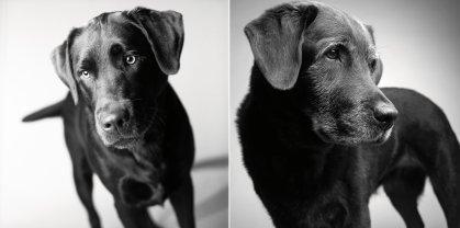 Dog Years Amanda Jones Corbet