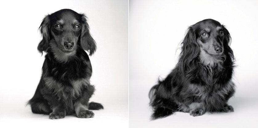 Dog Years Amanda Jones - Lily