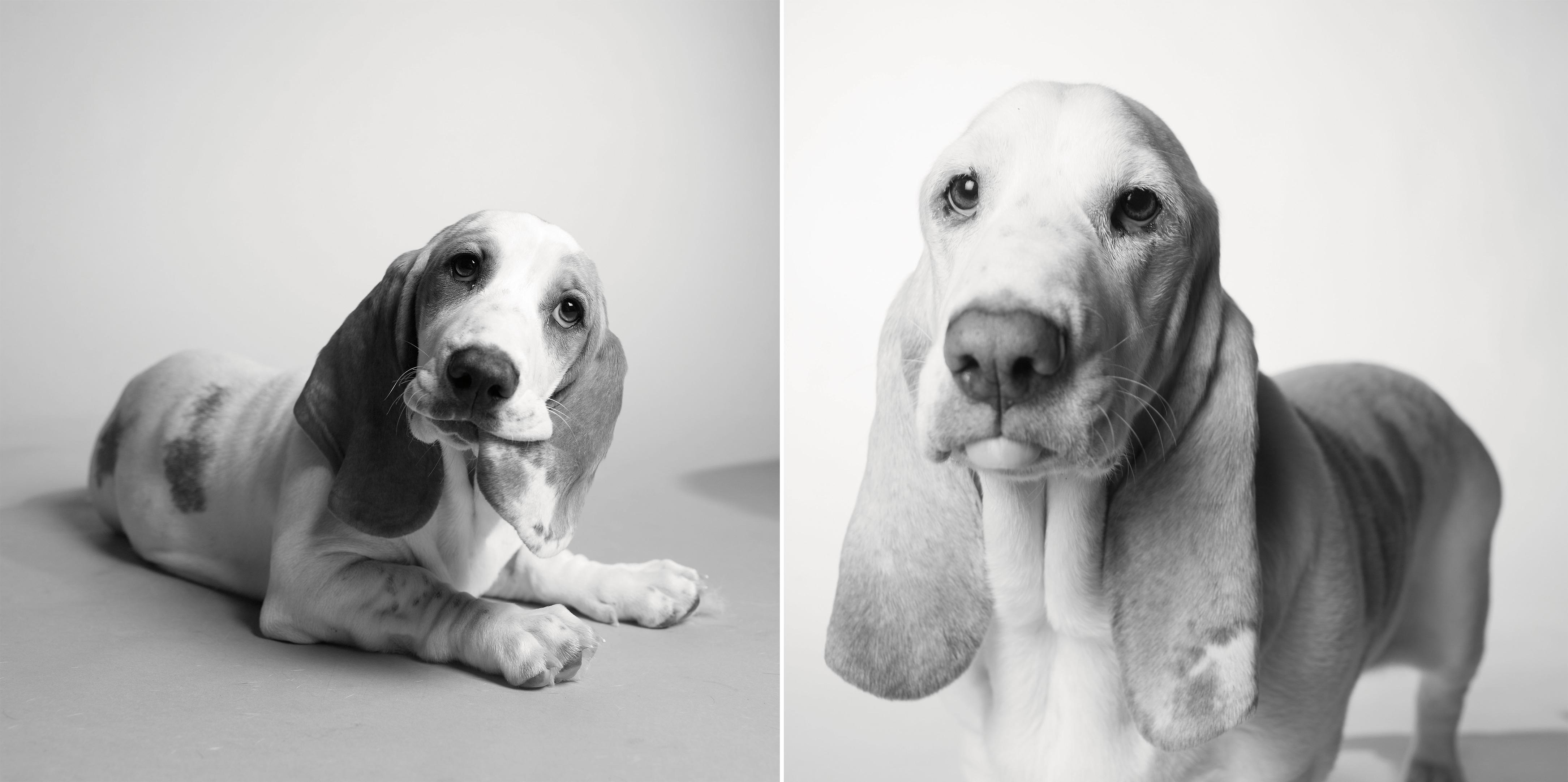 Poppy from Dog Years