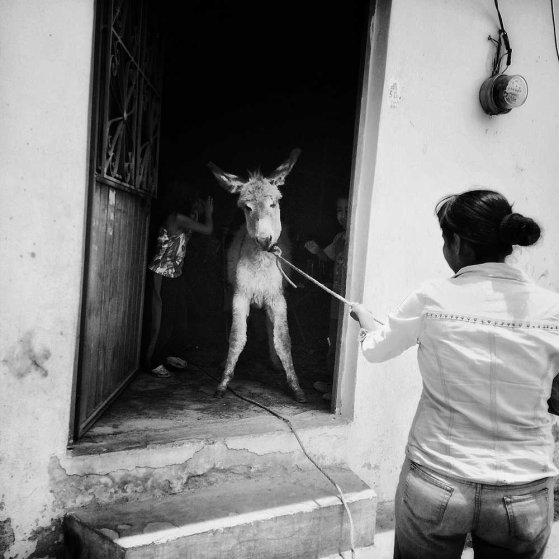 Tixtla, Guerrero, Mexico, April 28th, 2015 :Oh, look! There's a donkey in my living room!!! April 28th, 2015 #onassignment with @karlazabs in #tixtla #guerrero #mexico #photography #photojournalism #documentary #longtermproject #donkeyshttps://instagram.com/p/2CsTb_N5Kx/?taken-by=adrianazehbrauskas