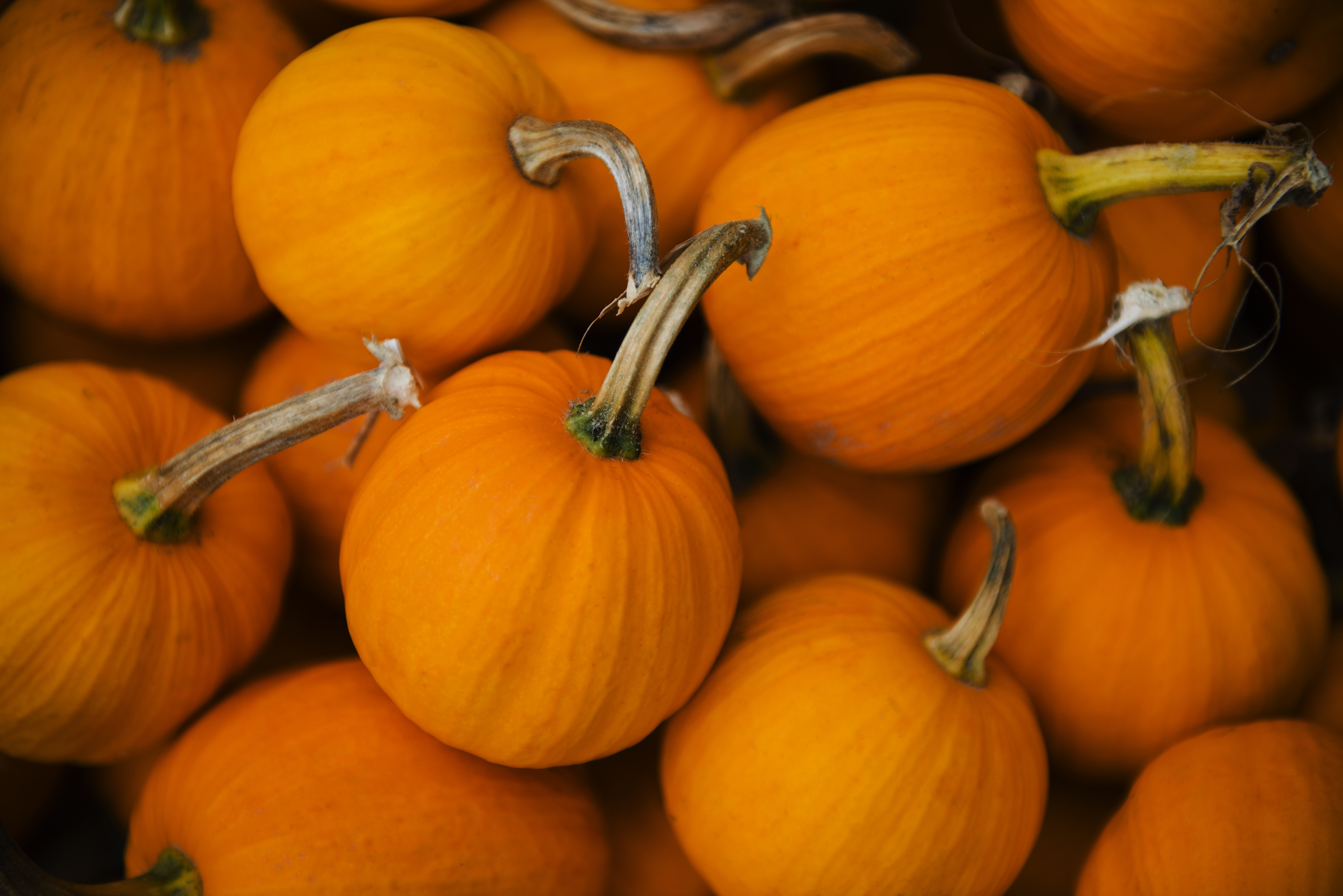 October is the uncontested best time to get a pumpkin, especially if you plan on carving it for Halloween.
