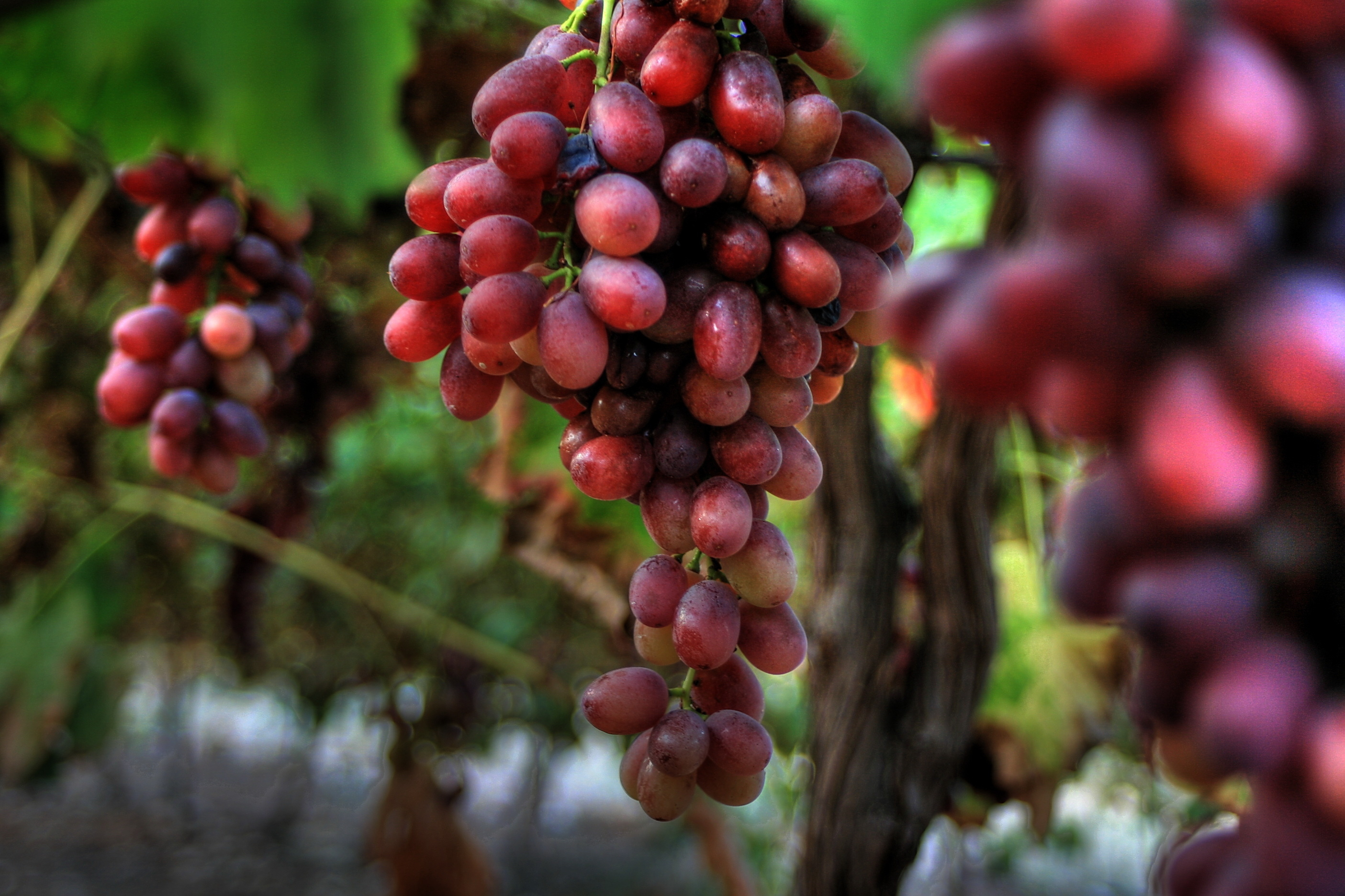 "If you're a fan of sweeter tasting grapes, then October is the month to buy them. ""Cooler nights bring out the sugar, and then you still have hot days so the grapes continue to ripen,"" says Romano."