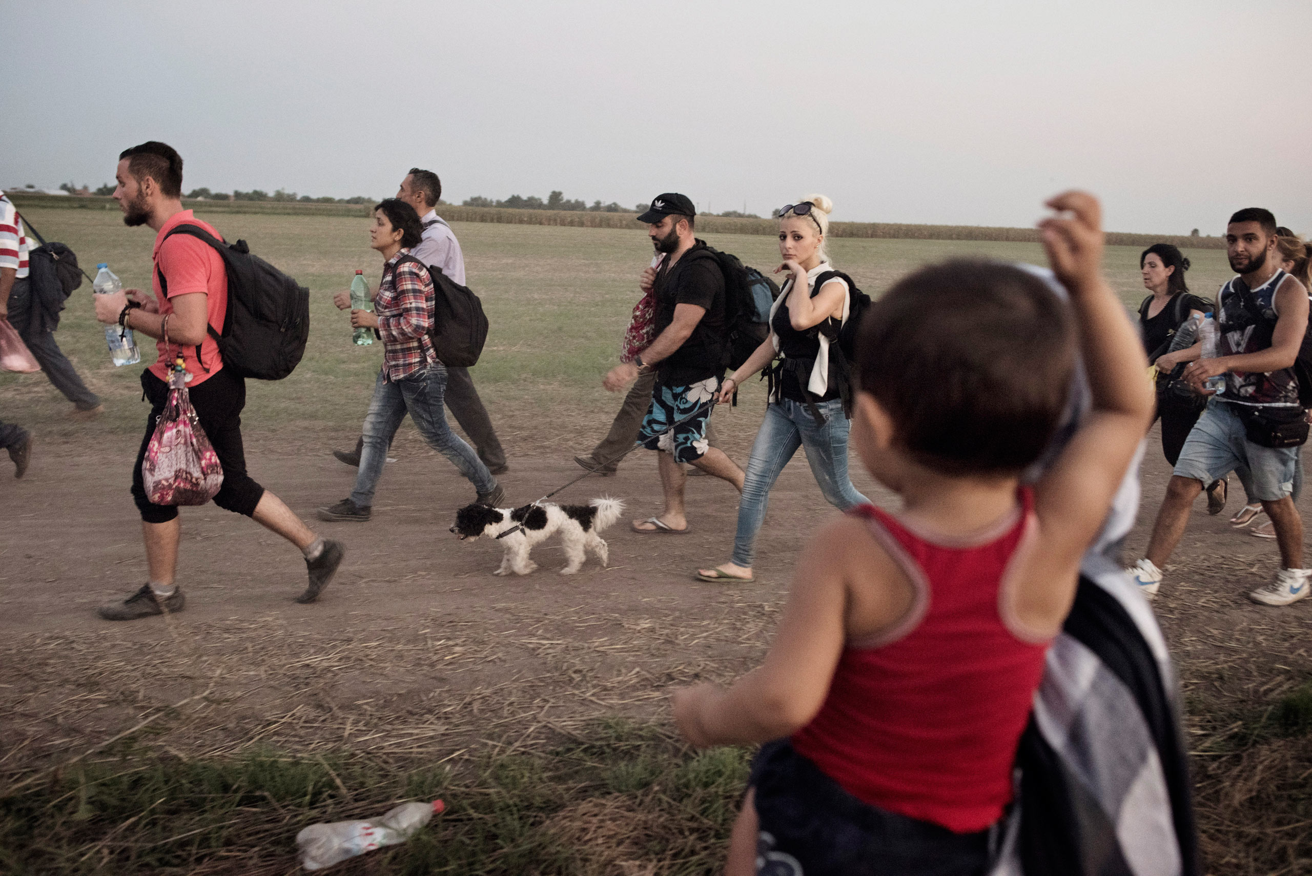 A group of migrants walks toward a Hungarian detention center for migrants arriving in the European Union, Aug. 31, 2015.