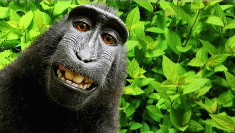 Naruto deserves rights to British photographer David Slater's monkey selfie, says PETA.