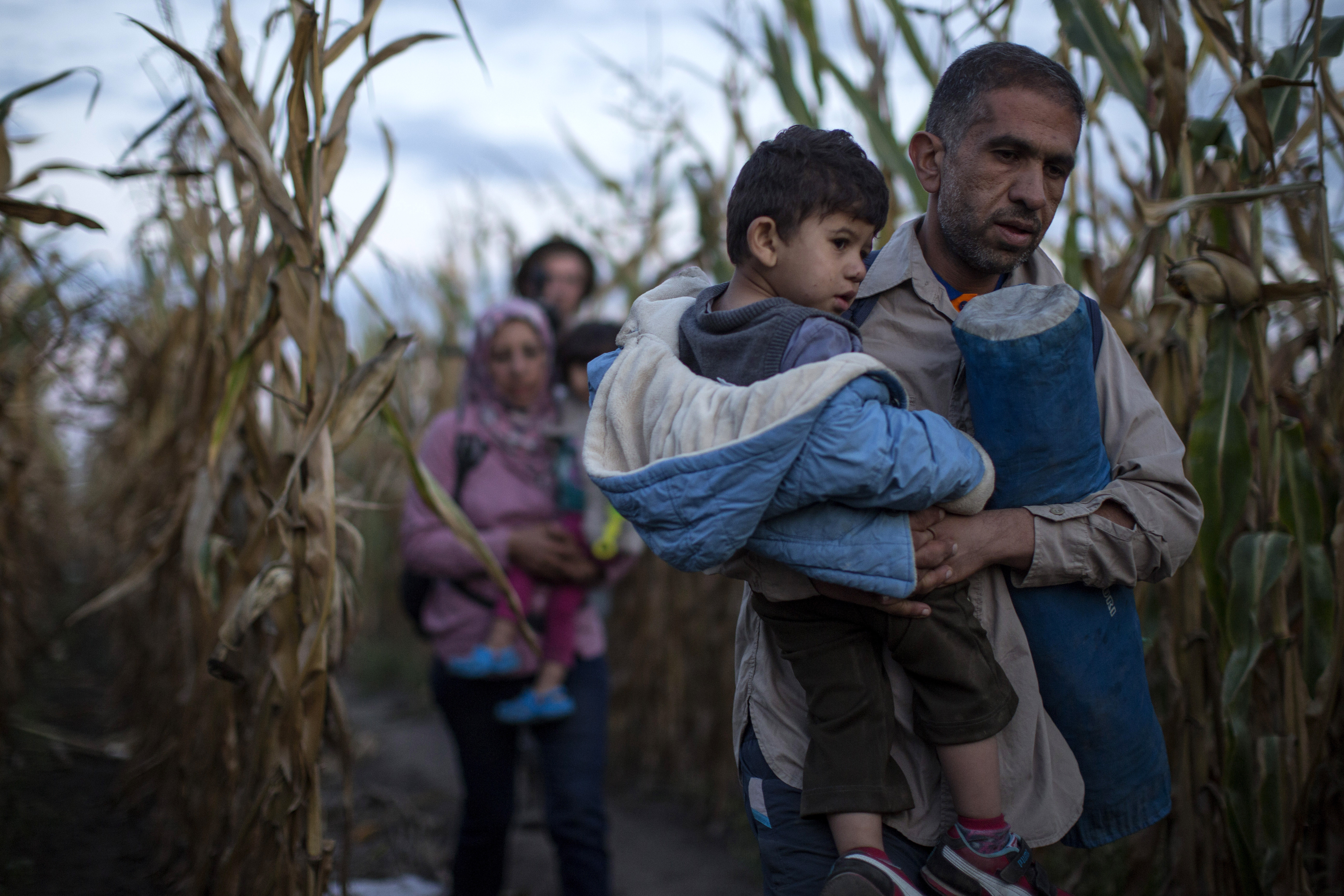 Refugees are smuggled through fields and forests in an attempt to evade the Hungarian police close to the Serbian border on September 8, 2015 in Roszke, Hungary.