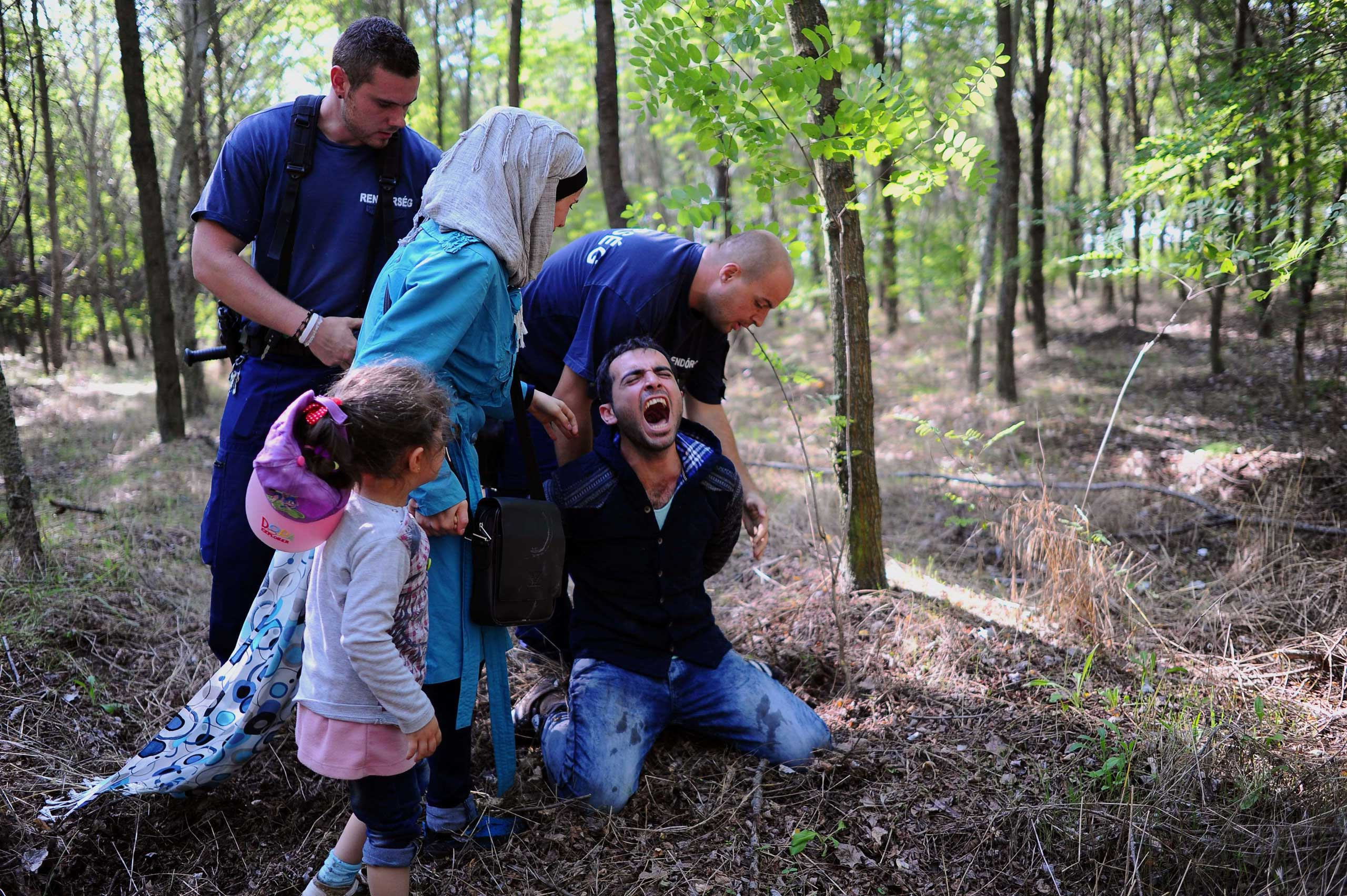 A father of a migrants family is arrested by the local police near the village of Roszke on the Hungarian-Serbian border on Aug. 28, 2015.