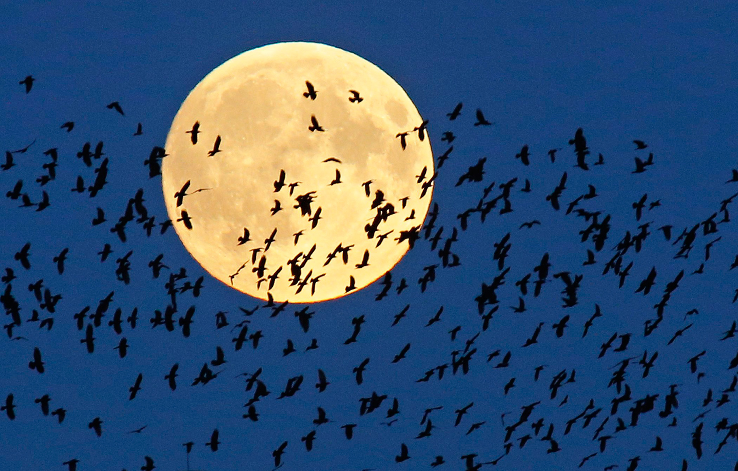 A flock of birds fly by as a super moon rises in Mir, 60 miles west of Minsk, Belarus, on Sept. 27, 2015.