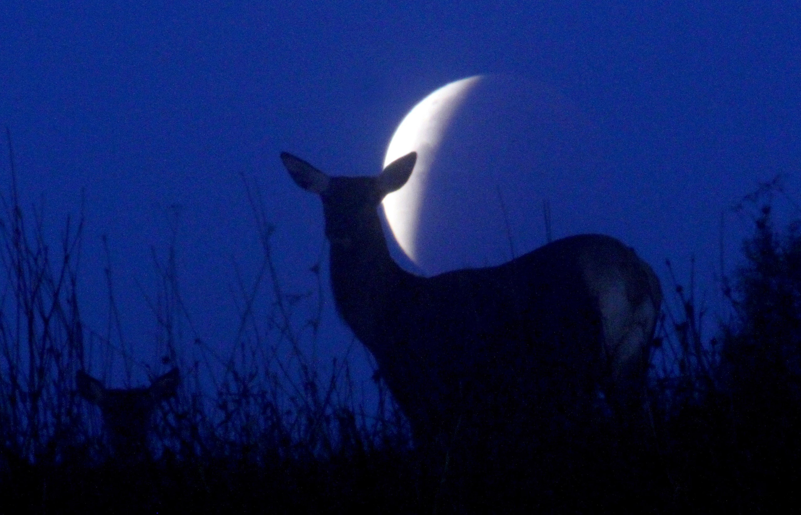 Reindeer are seen silhouetted against the supermoon during the lunar eclipse near the village of Yavterishki, some 250 kilometers north from Minsk on Sept. 28, 2015.