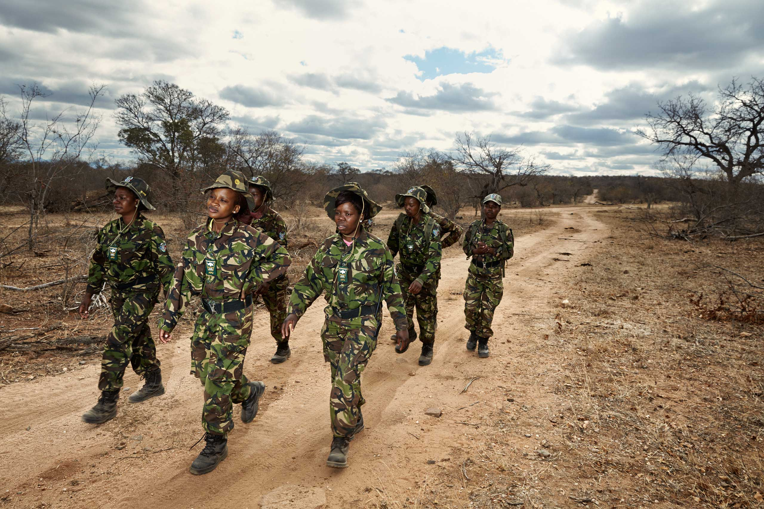 Black Mambas on patrol in Balule Nature Reserve, in northern South Africa.