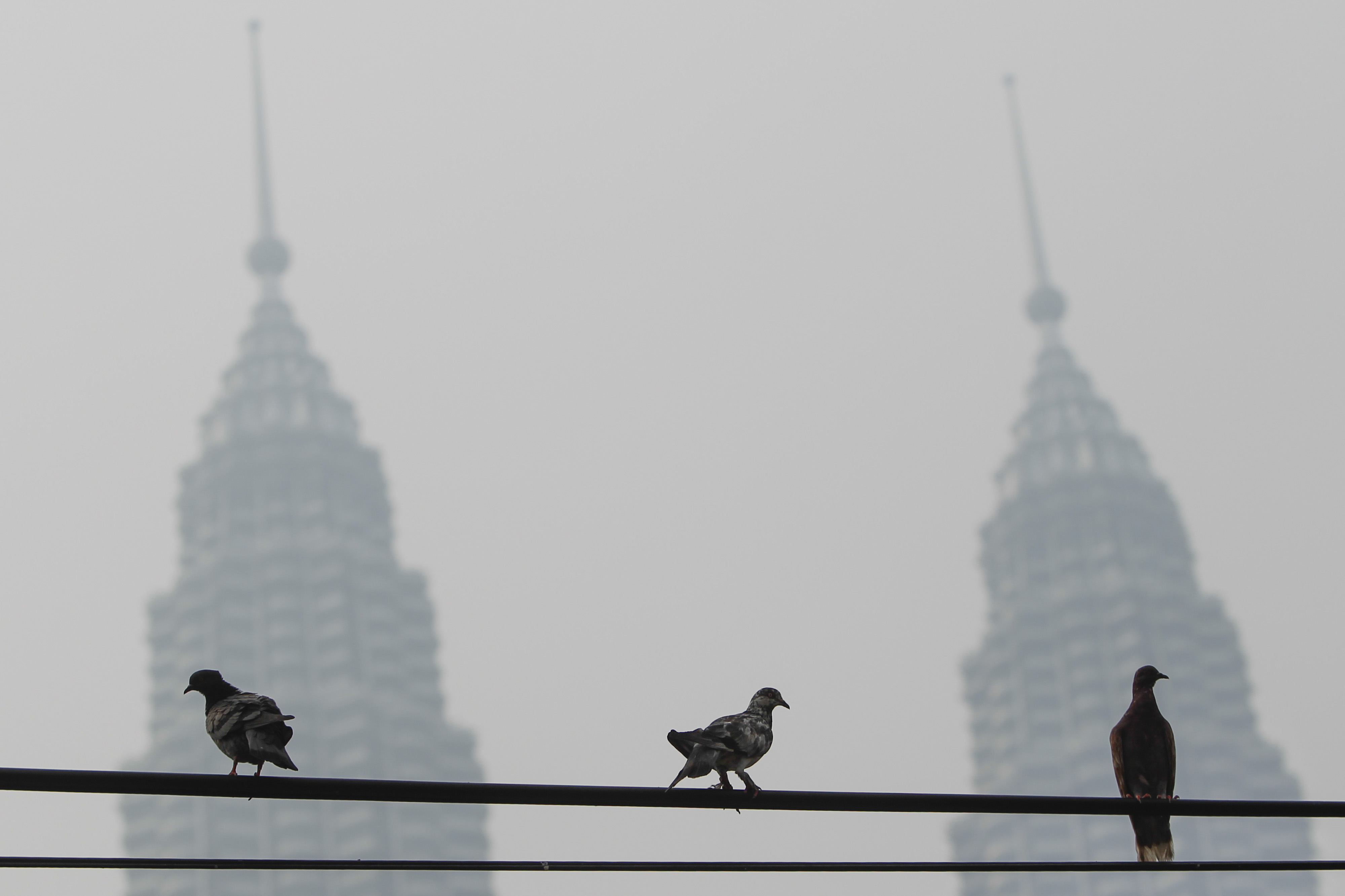 Pigeons perch on a power cable against Malaysia's landmark building, Petronas Twin Towers, shrouded with haze in Kuala Lumpur, on Oct. 4, 2015. The haze is caused by the burning of forests in Indonesia's Sumatra and Borneo islands