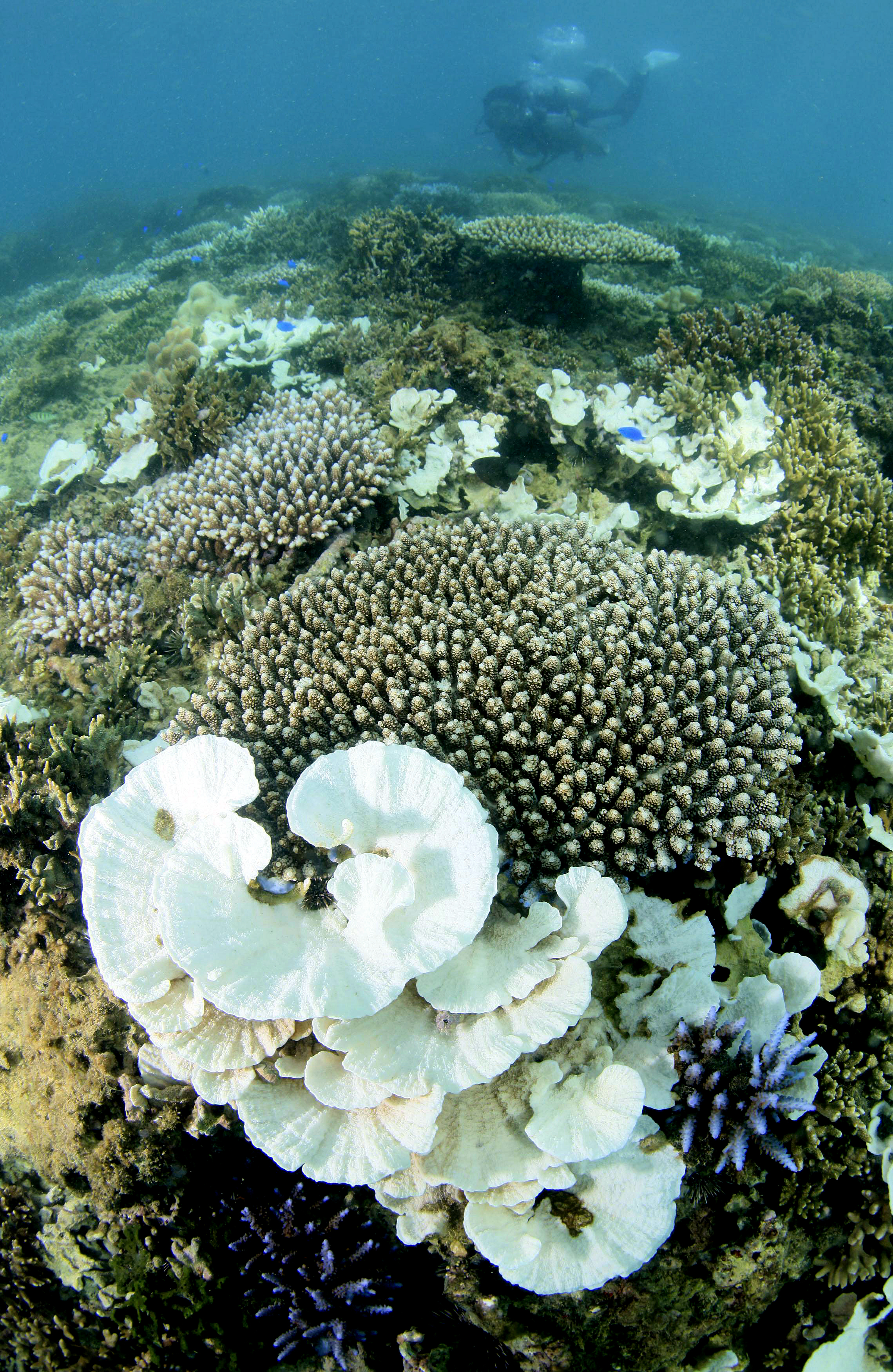 Corals are bleached on a seabed near Okinawa island on Aug. 26, 2013.