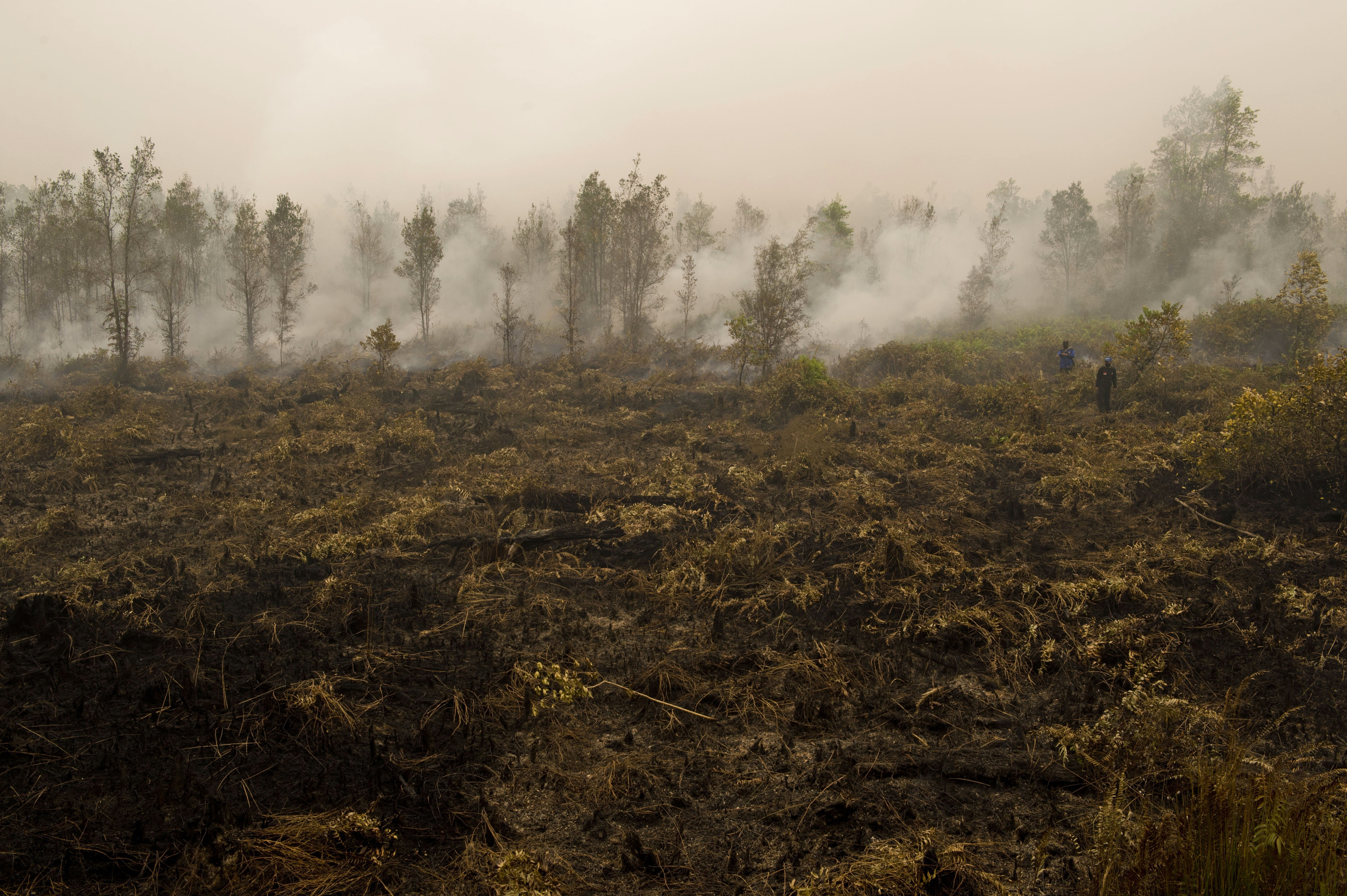 Indonesian firefighters extinguish fire on a vast burning peatland forest in Jabiren Raya district in Indonesia's Central Kalimantan province on Borneo island on Sept. 24, 2015
