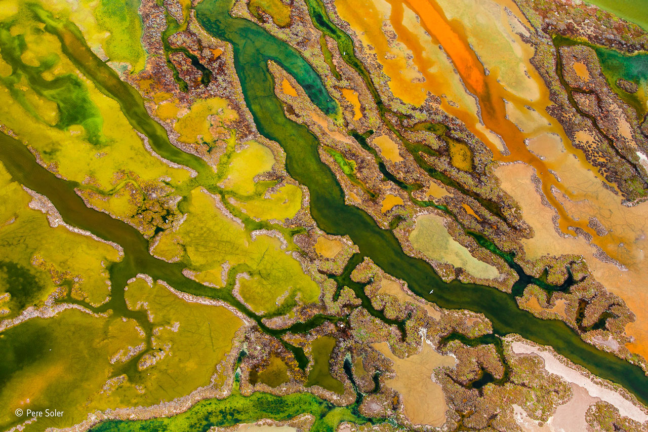 From the Sky category winner: The art of Algae. The Bahía de Cádiz Natural Park on the coast of Andalucia, Spain, is a mosaic of marshes, reedbeds, sand dunes and beaches, which attracts great numbers of birds, and in spring it is an important migration stopping-off point. Pere was there for the birds but also for a spring phenomenon, only fully visible from the air. As the temperature warms and the salinity changes, the intertidal wetlands are transformed by color as bright green seaweed intermingles with multicolored microalgal blooms. White salt deposits and brown and orange sediments colored by sulphurous bacteria and iron oxide add to the riot of color. The full display usually lasts only a few weeks in May or June, but it's not possible to predict exactly when. Pere took his chances in June, hired a plane and, at midday, when the tide was out and the light was overhead, he was able to photograph the rich tapestry of color and texture. The spectacle was, said the pilot, the most beautiful he'd seen in many years of flying over the delta.