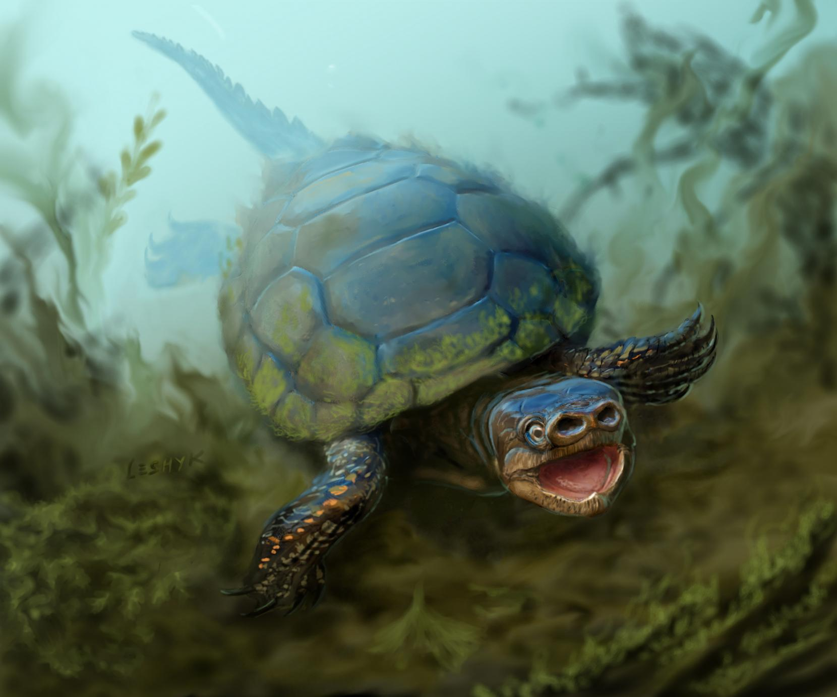 An artist's interpretation of Arvinachelys goldeni, a species of extinct pig-nose turtle.