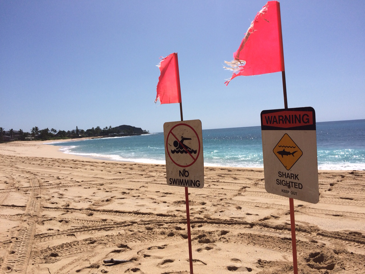 Signs warning of a shark sighting are posted at Makaha Beach Park in Waianae, Hawaii, on Oct. 29, 2015.