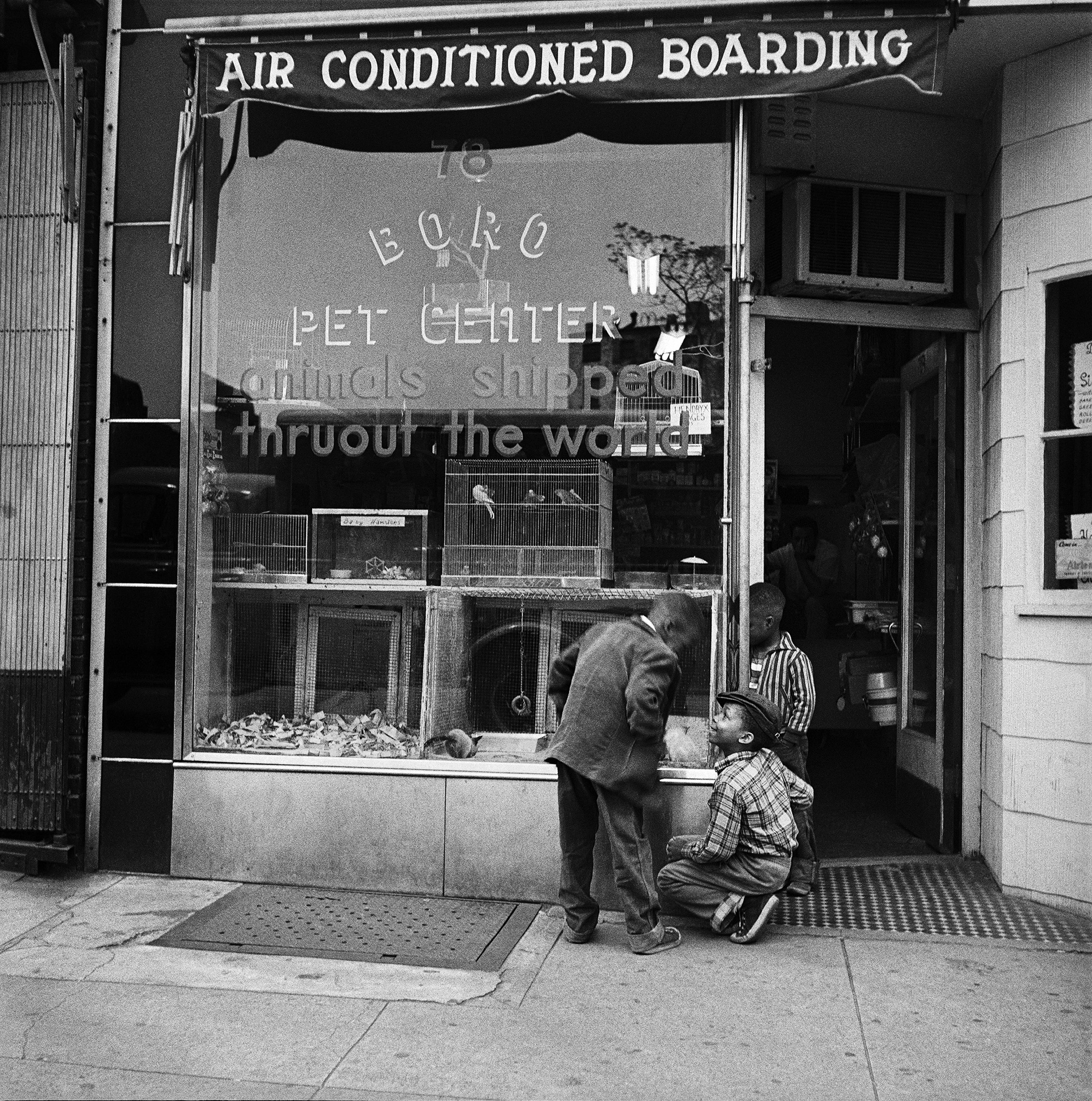 Three young boys enjoy the animals in the window of Boro Pet Center in Brooklyn Heights in March 1958.