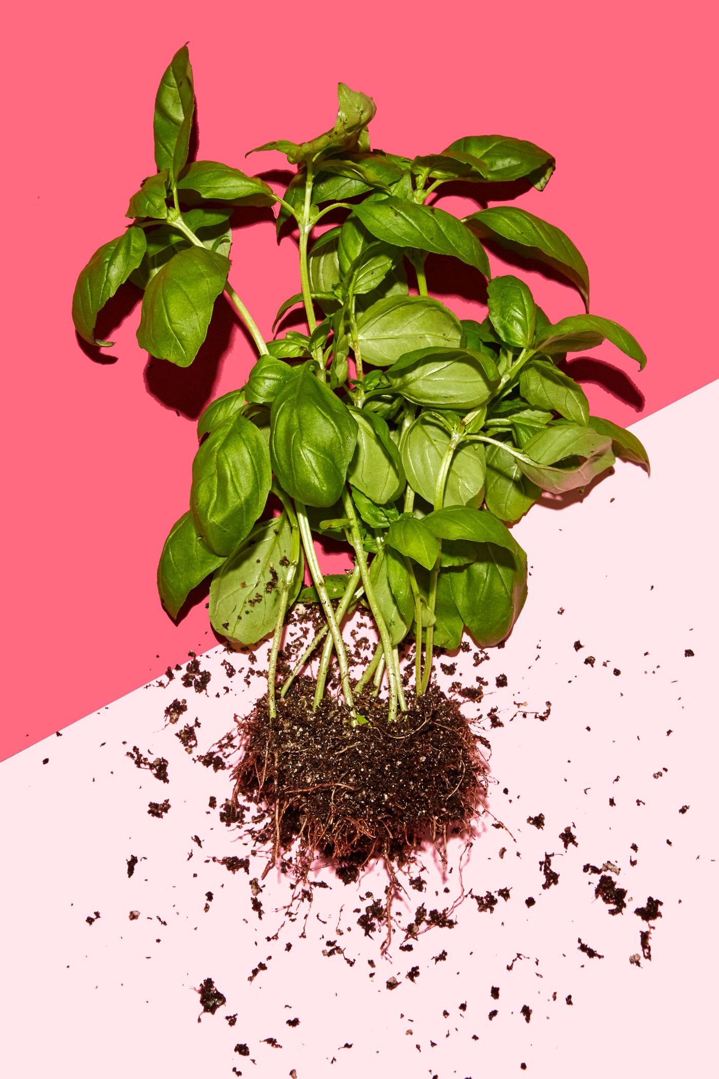 healthiest foods, health food, diet, nutrition, time.com stock, basil, herb