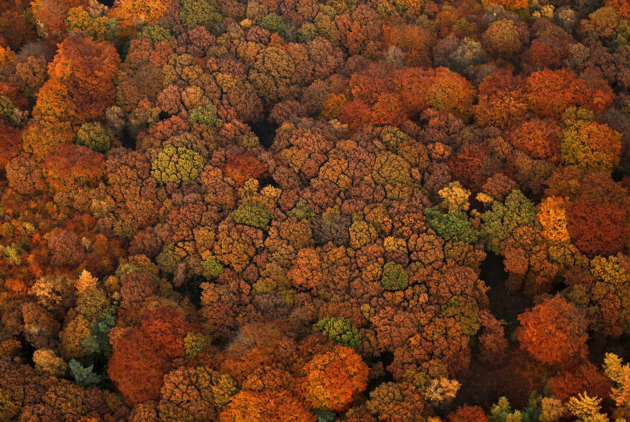 An aerial view shows a deciduous forest on a sunny autumn day in Recklinghausen, Germany on Oct. 31, 2015.