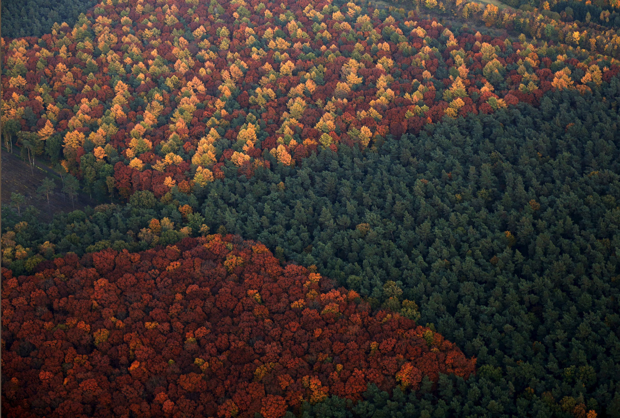 An aerial view shows a mixed forest on a sunny autumn day in Recklinghausen, Germany on Oct. 31, 2015.