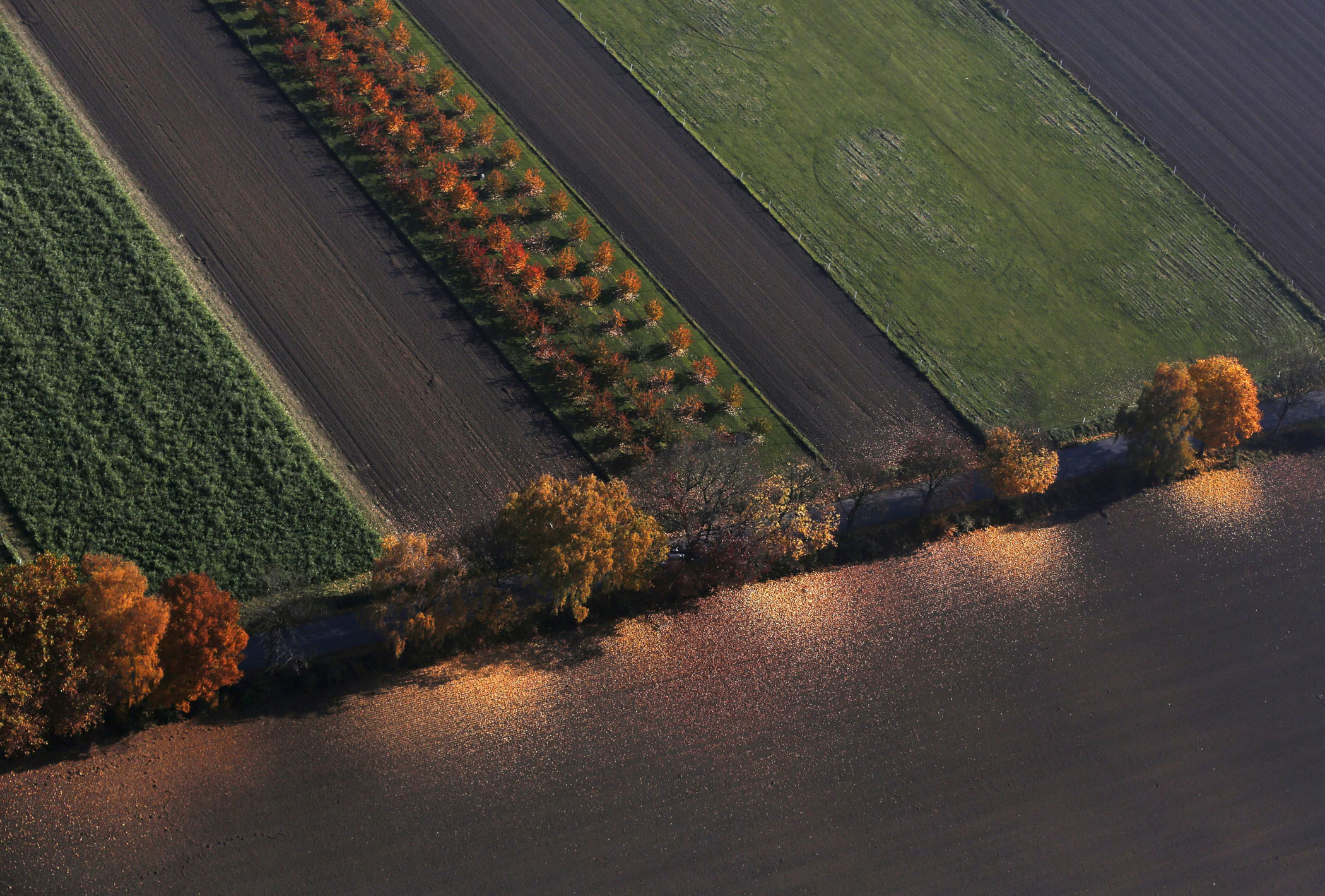 An aerial view shows a field with deciduous trees on a sunny autumn day in Recklinghausen, Germany on Oct. 31, 2015.