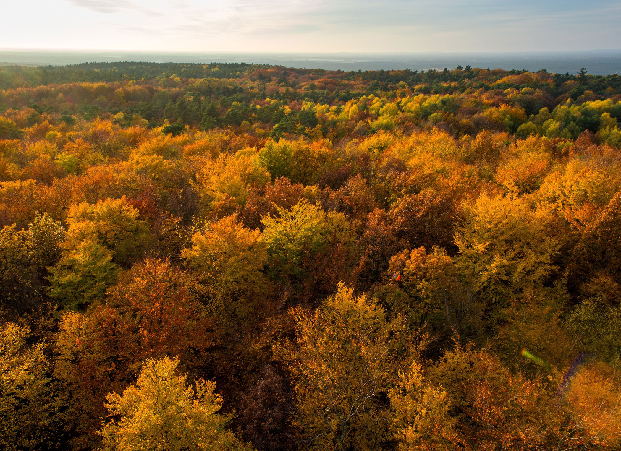 The view over an autumn birch forest from a viewing platform as the sun sets in the Rauen Hills in Rauen, Germany on Nov. 1, 2015.